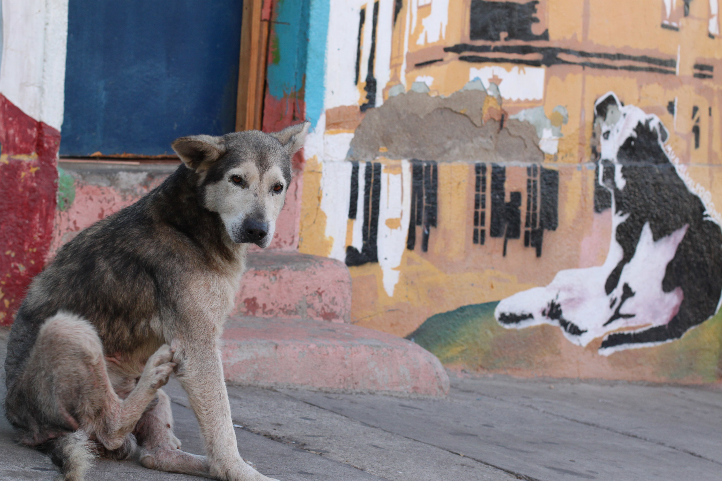 Dogs and art in Valparaiso, Chile.