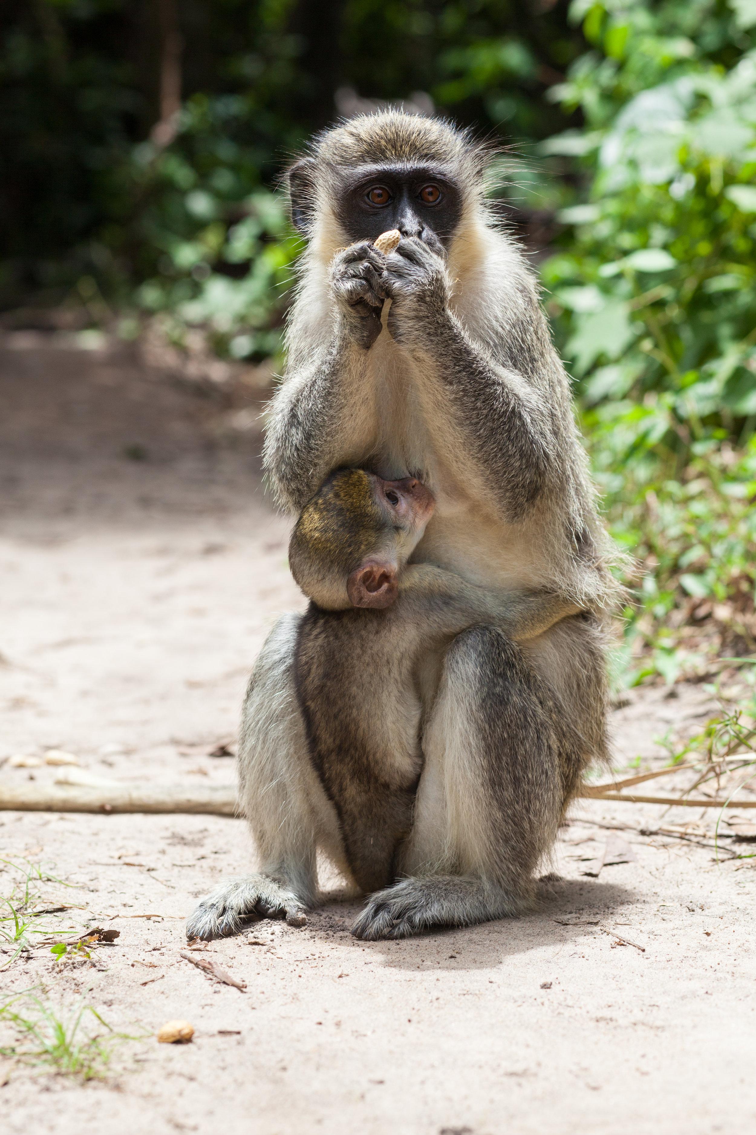 Monkey_Forest_18.jpg