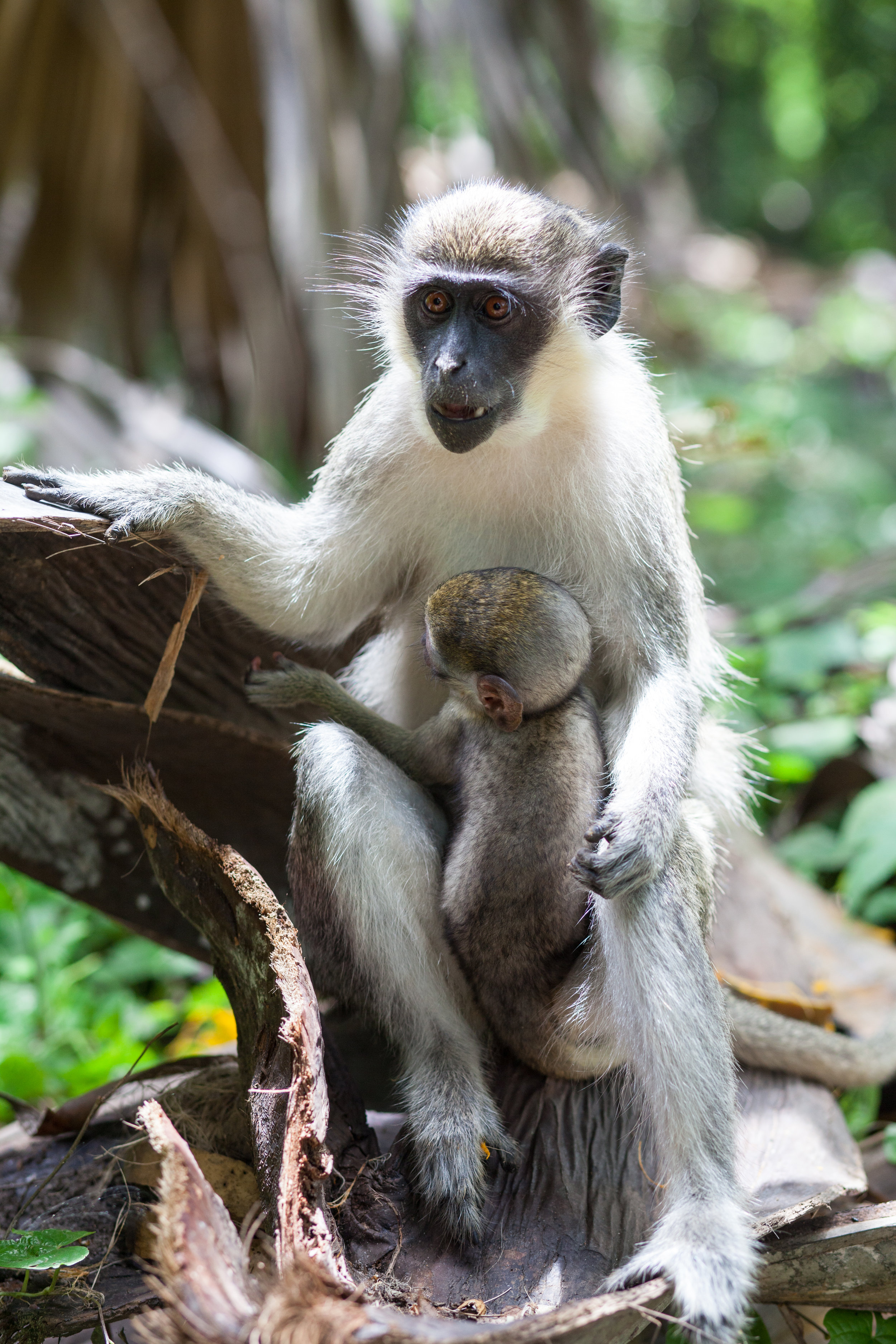 Monkey_Forest_23.jpg