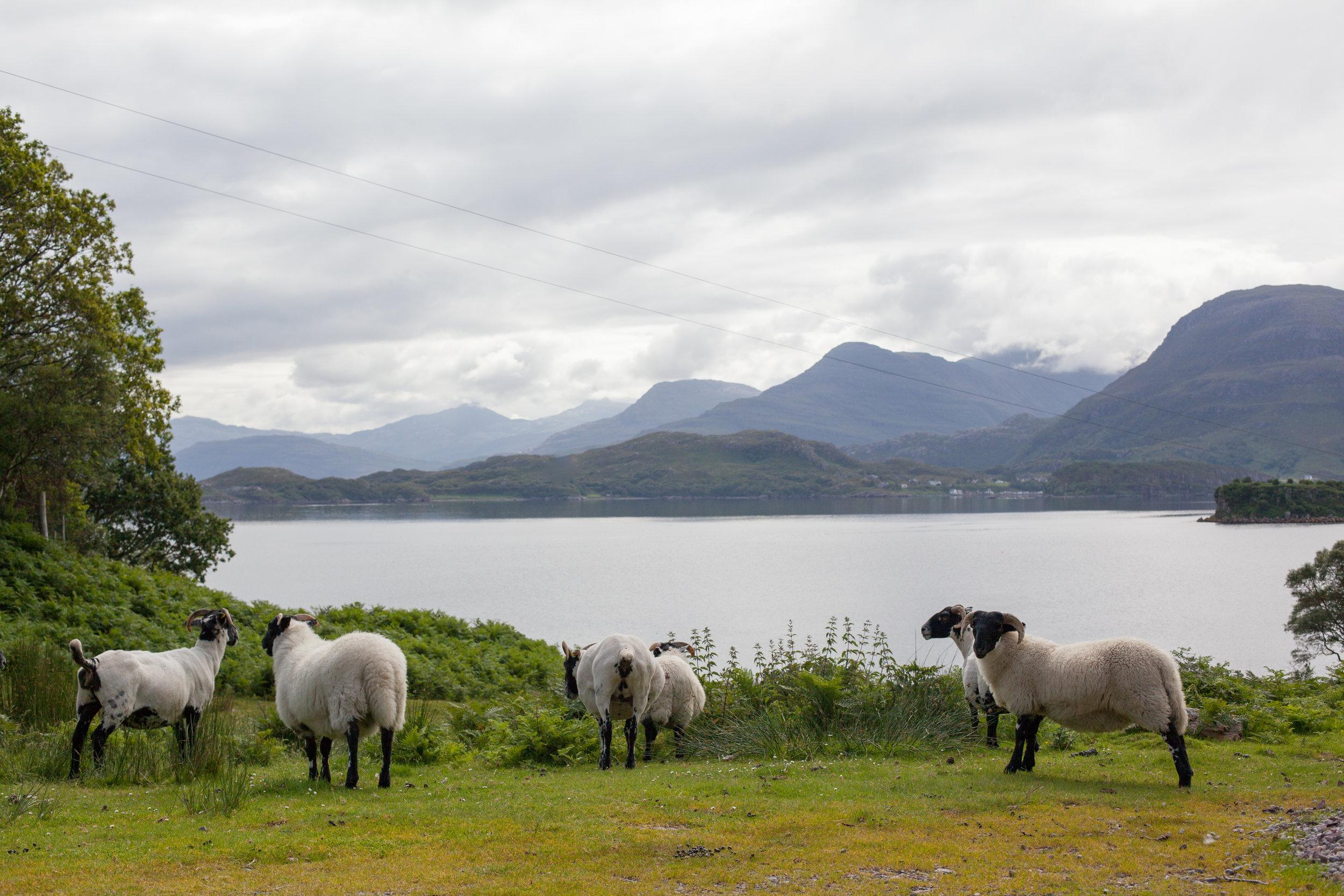 Scottish Wildlife.