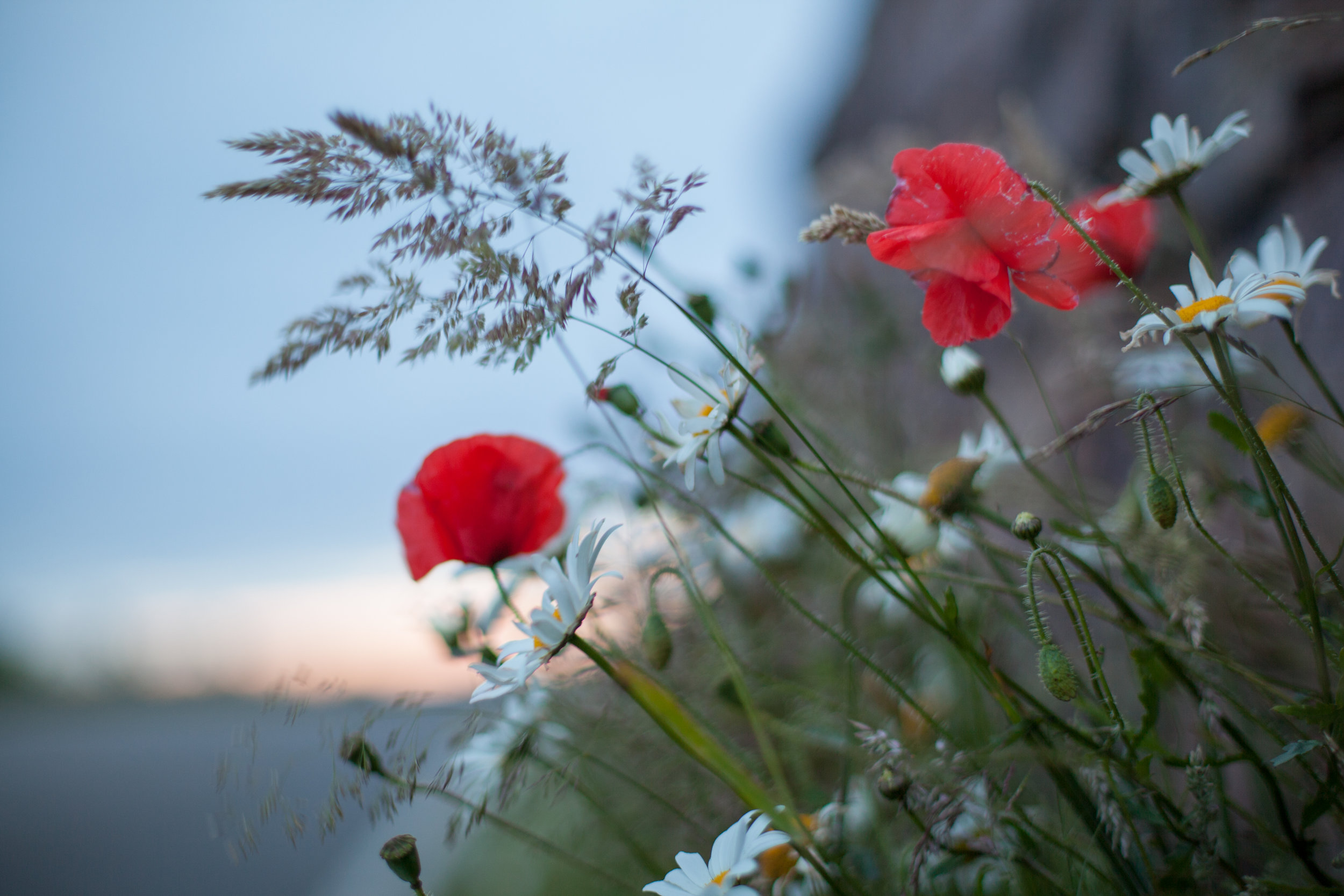 Wild flowers grow on the side of a road.