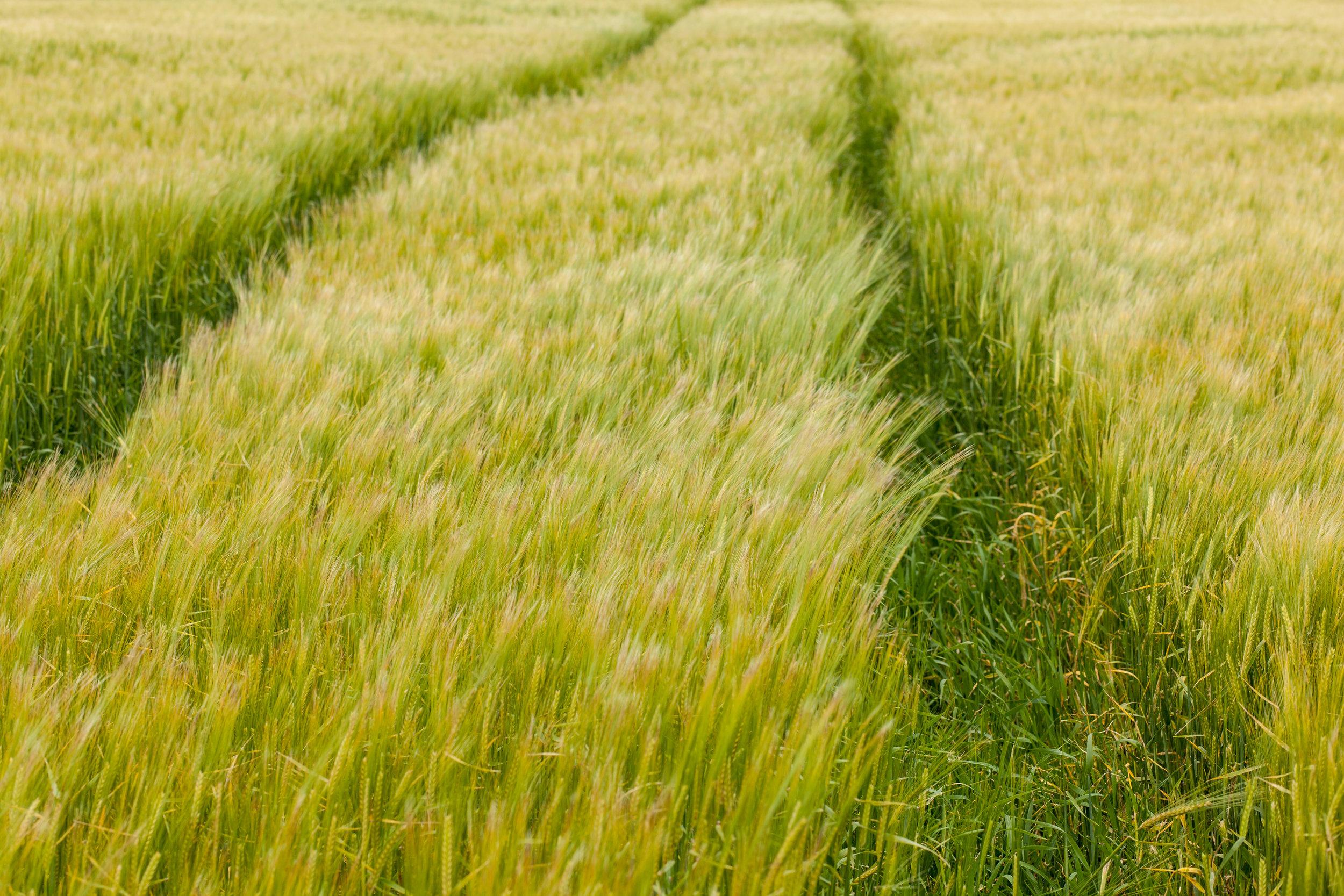 A farmers field in Scotland.