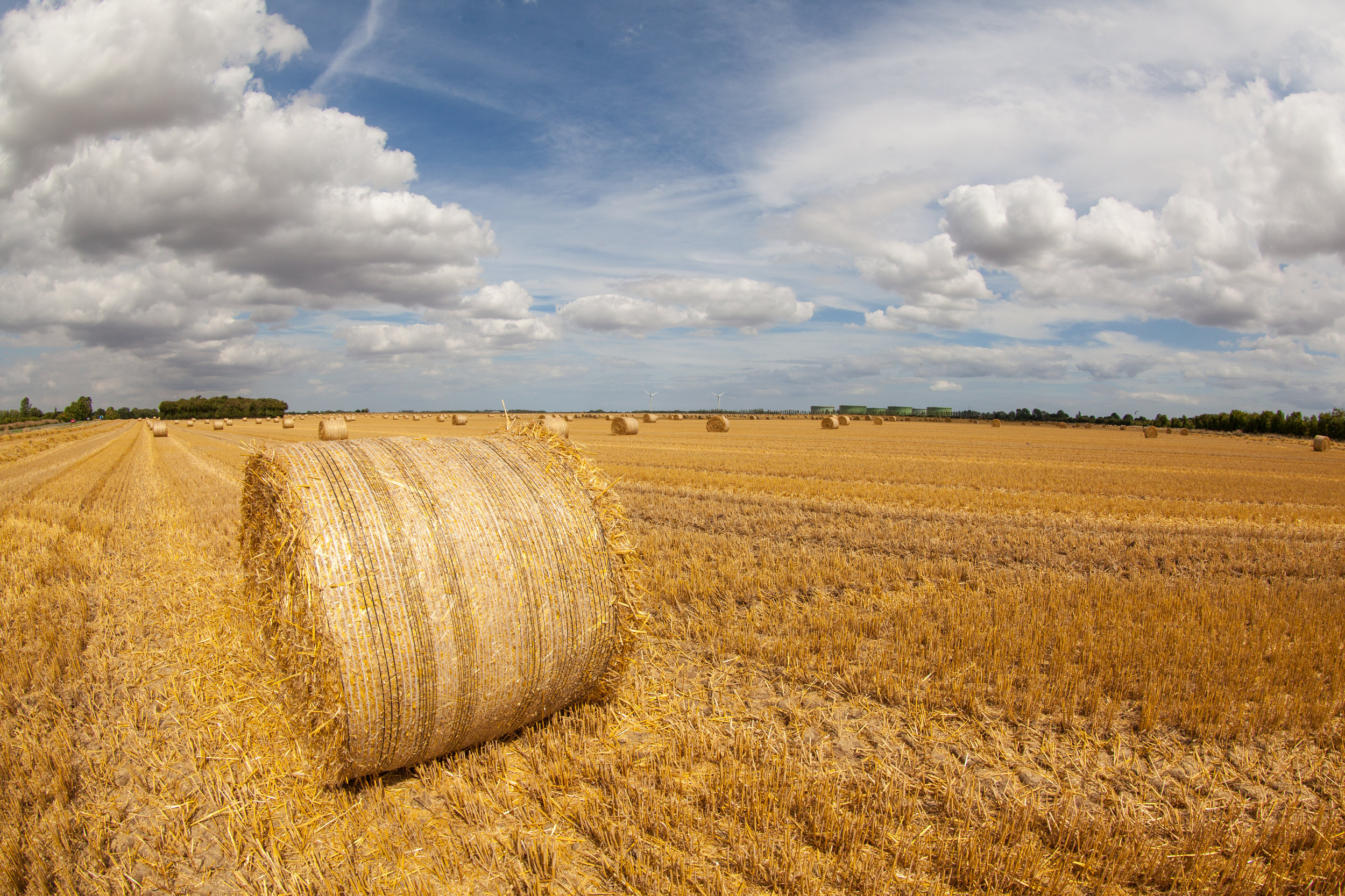 Hay bails in a field, summertime in England.