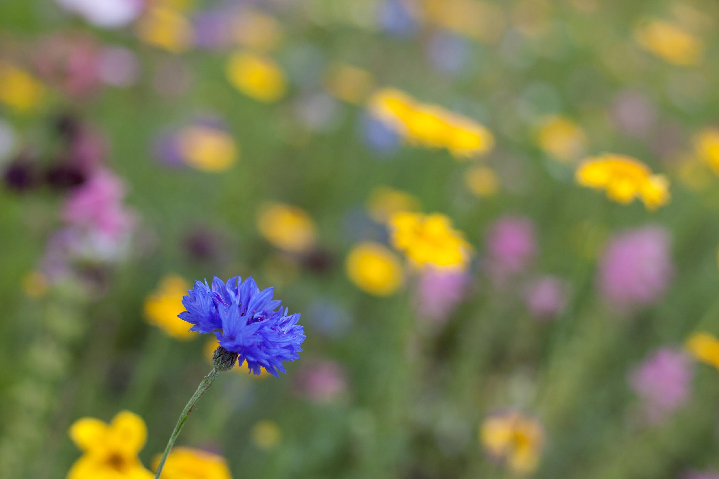 Wild flower photography.
