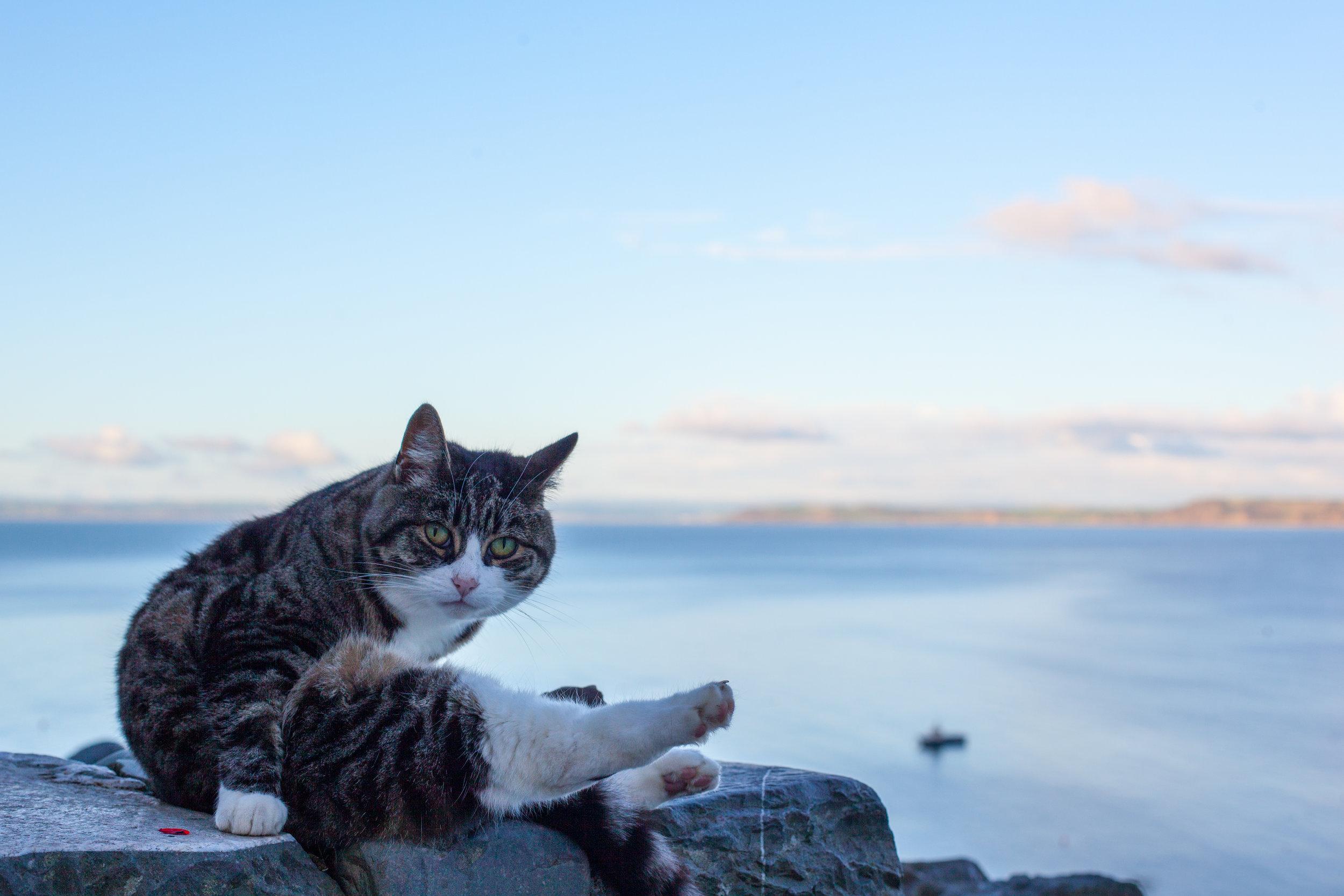 A cat at sunset overlooking Clovelly beach in Devon.