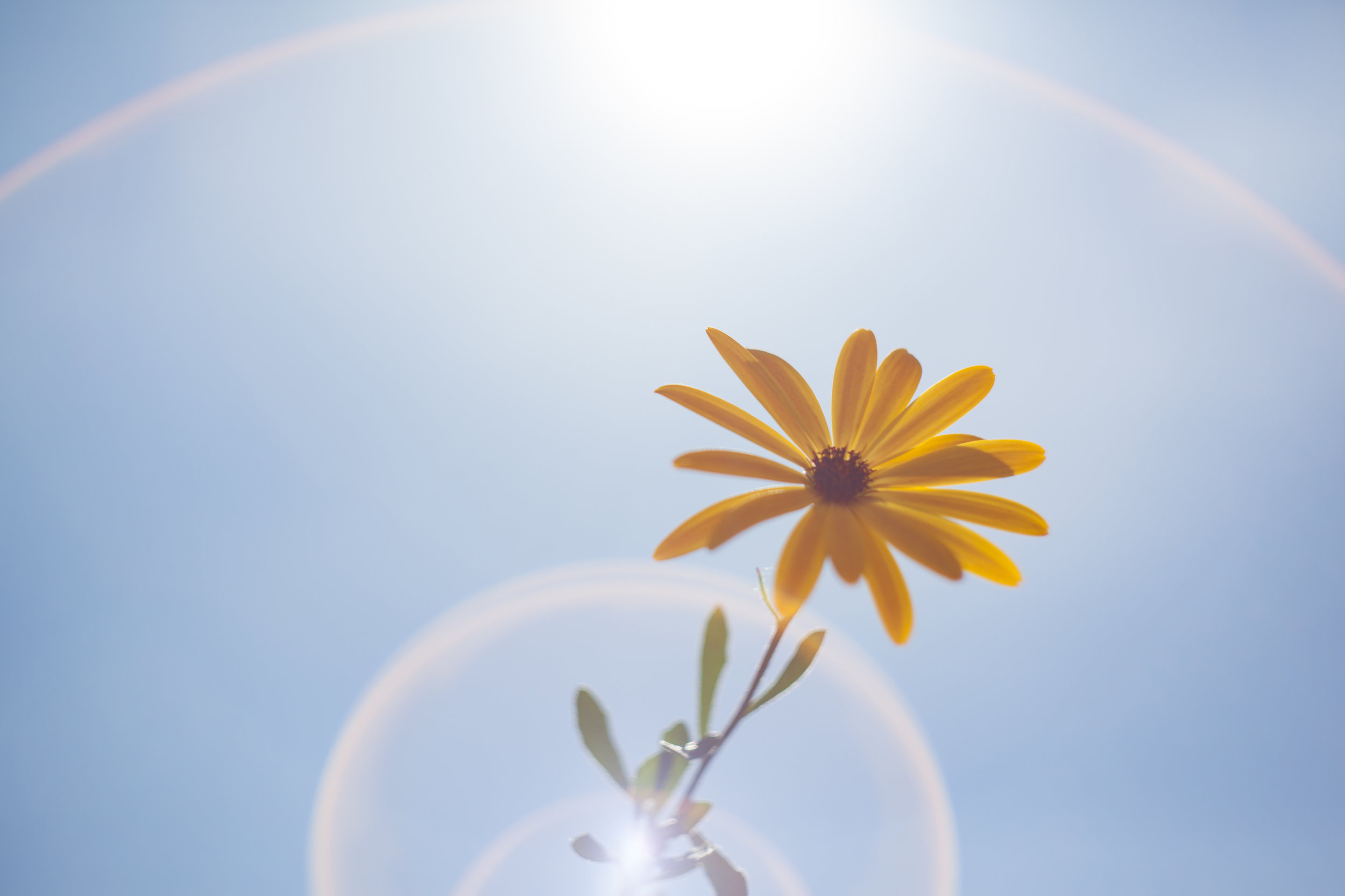 Negative space and flare add elements to the composition of this flower in the summer.