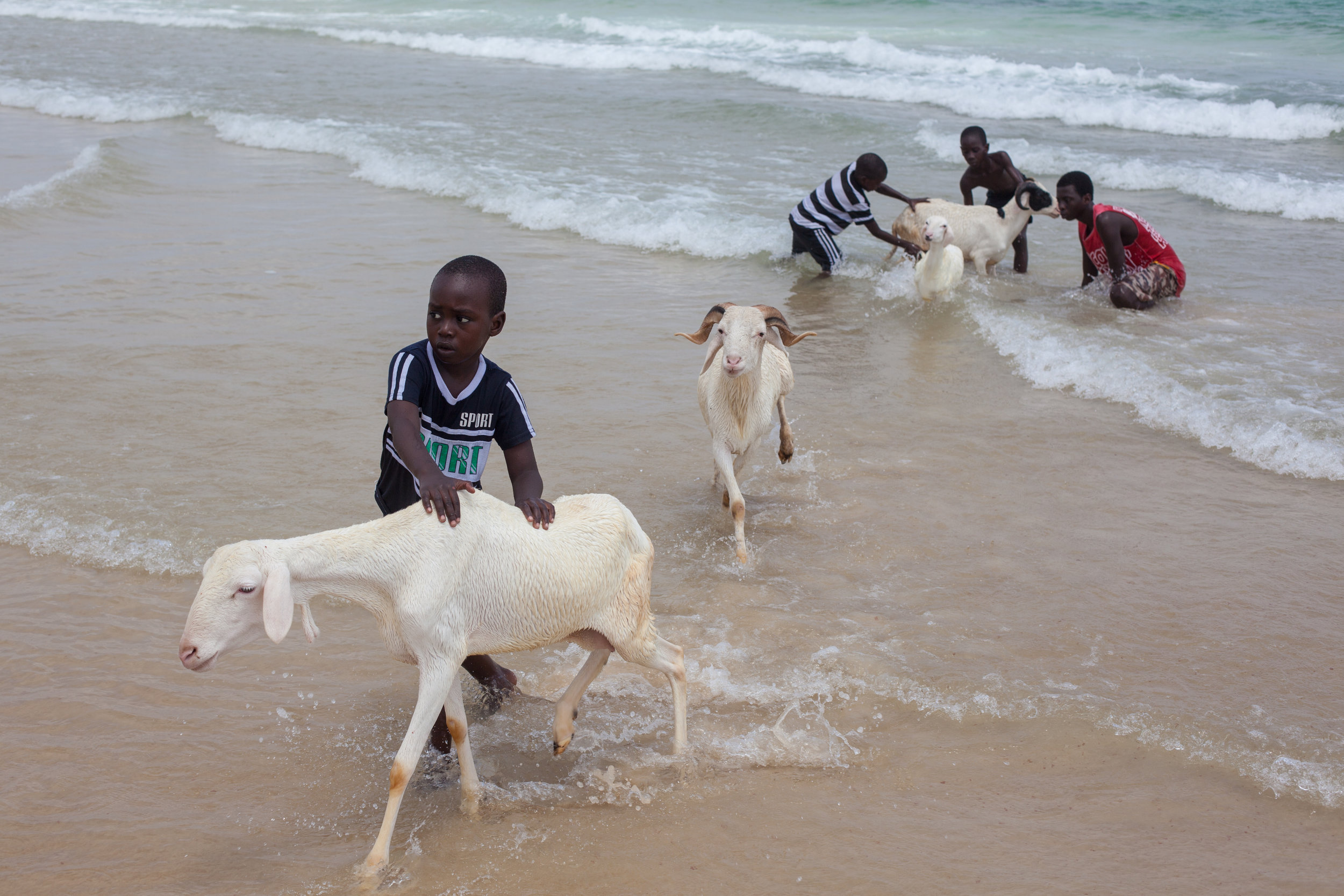 Children washing sheep in the ocean at Yoff Beach in Senegal.