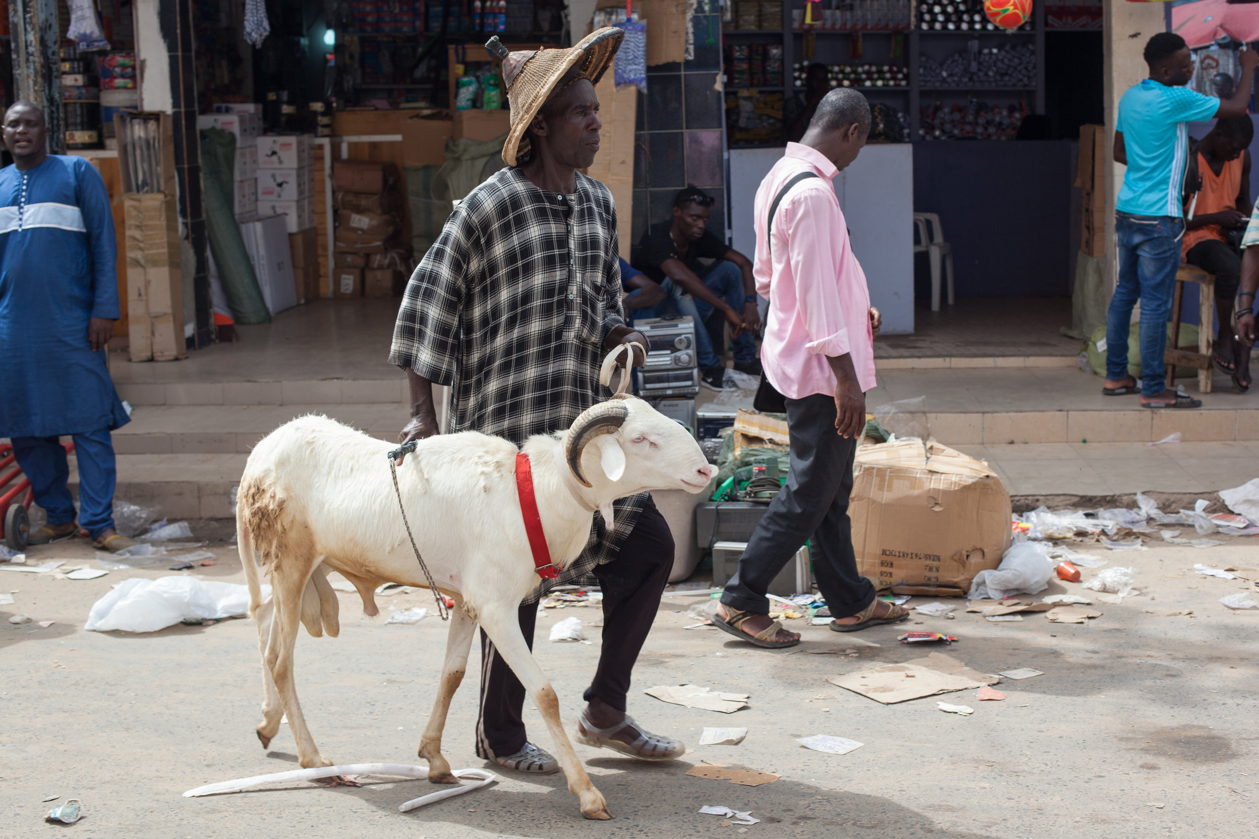 Selling sheep at the market in Dakar, Senegal before the Tabaski Festival.