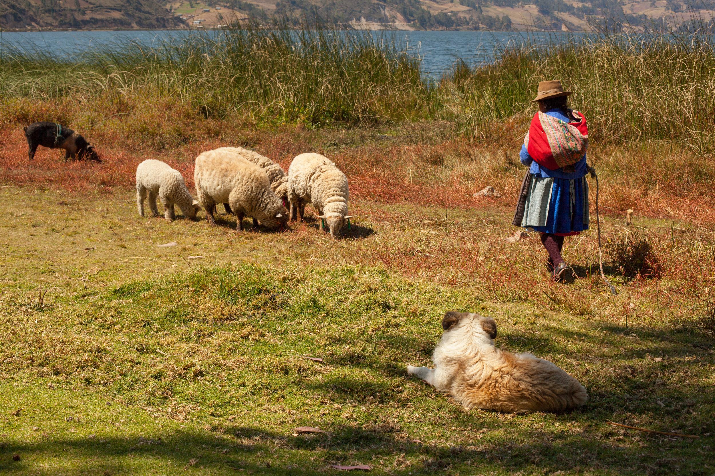 The shores of Lake Pachuca, Andahuaylas in Peru.