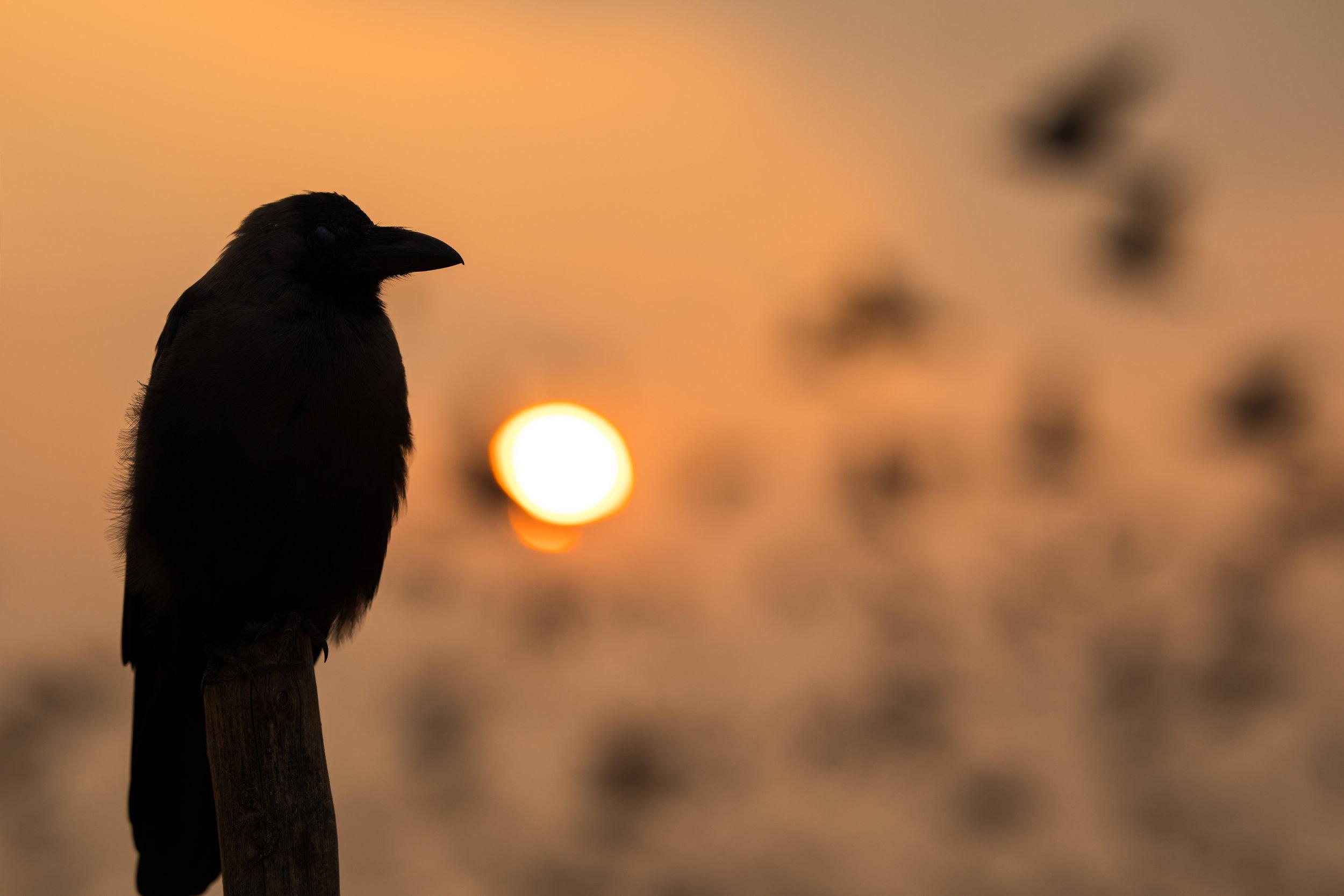 CHENNAI_BIRDS.jpg