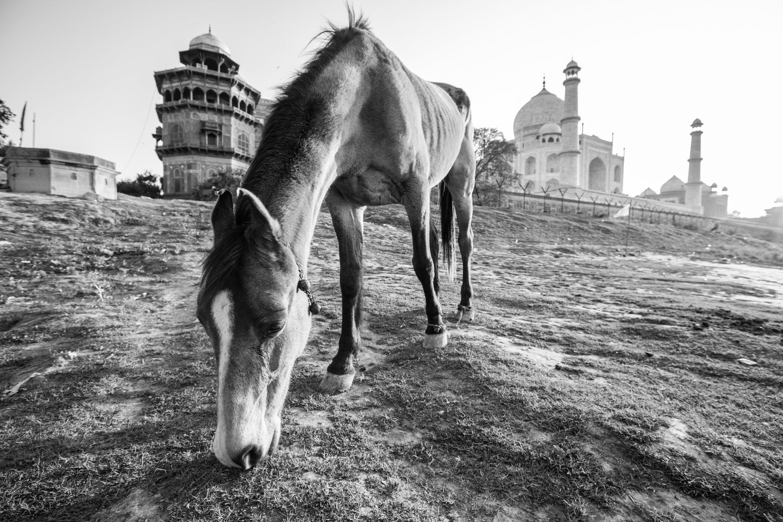 Agra_37.jpg