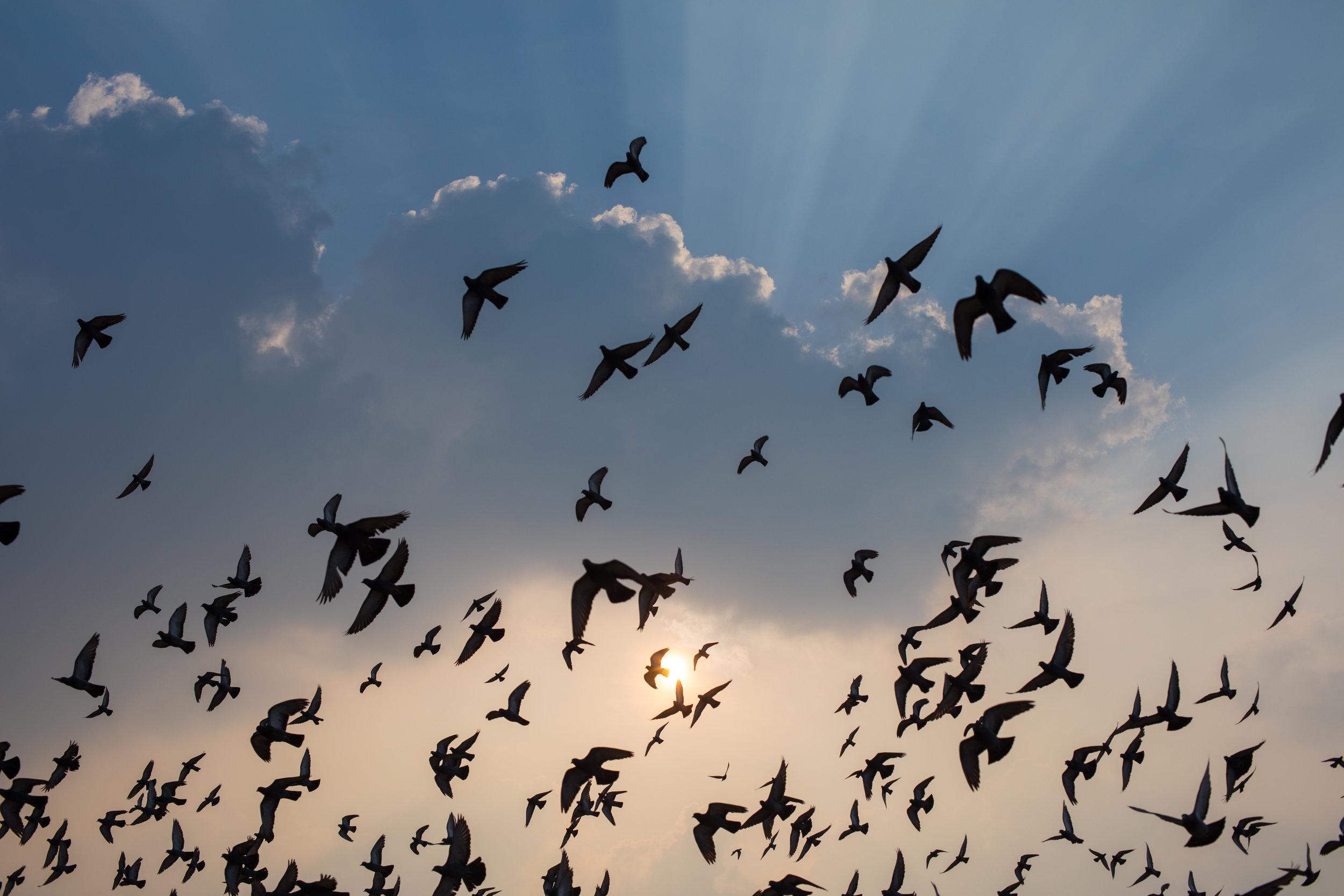 Thousands of birds at sunrise at Marina Beach in Chennai.