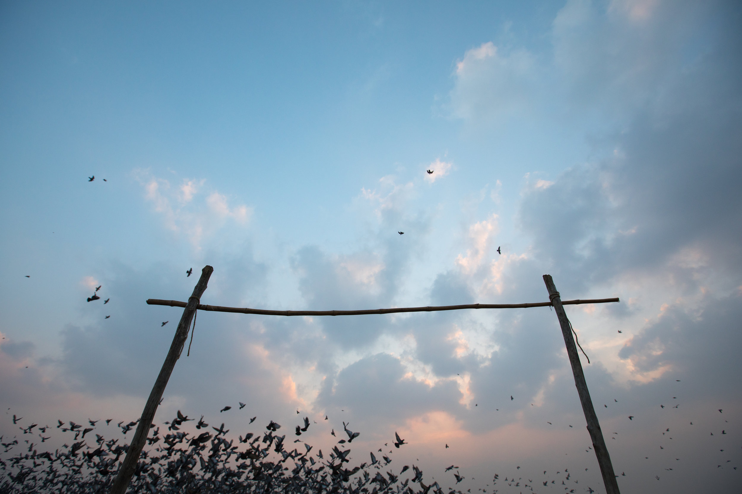 Thousands of birds take off behind a makeshift goal post on the beach in India.