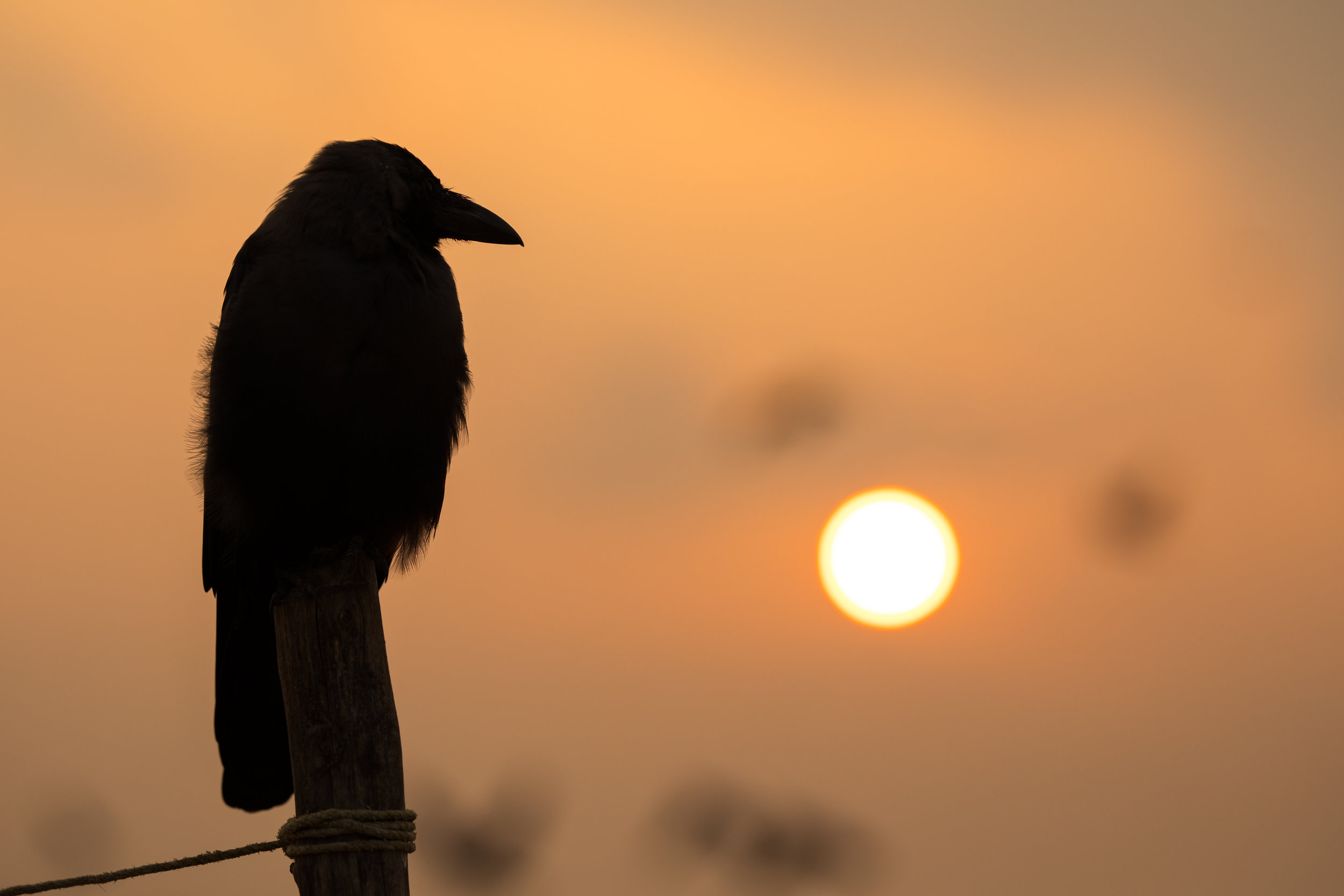 A silhouette of a bird against a golden sky at sunrise in India.