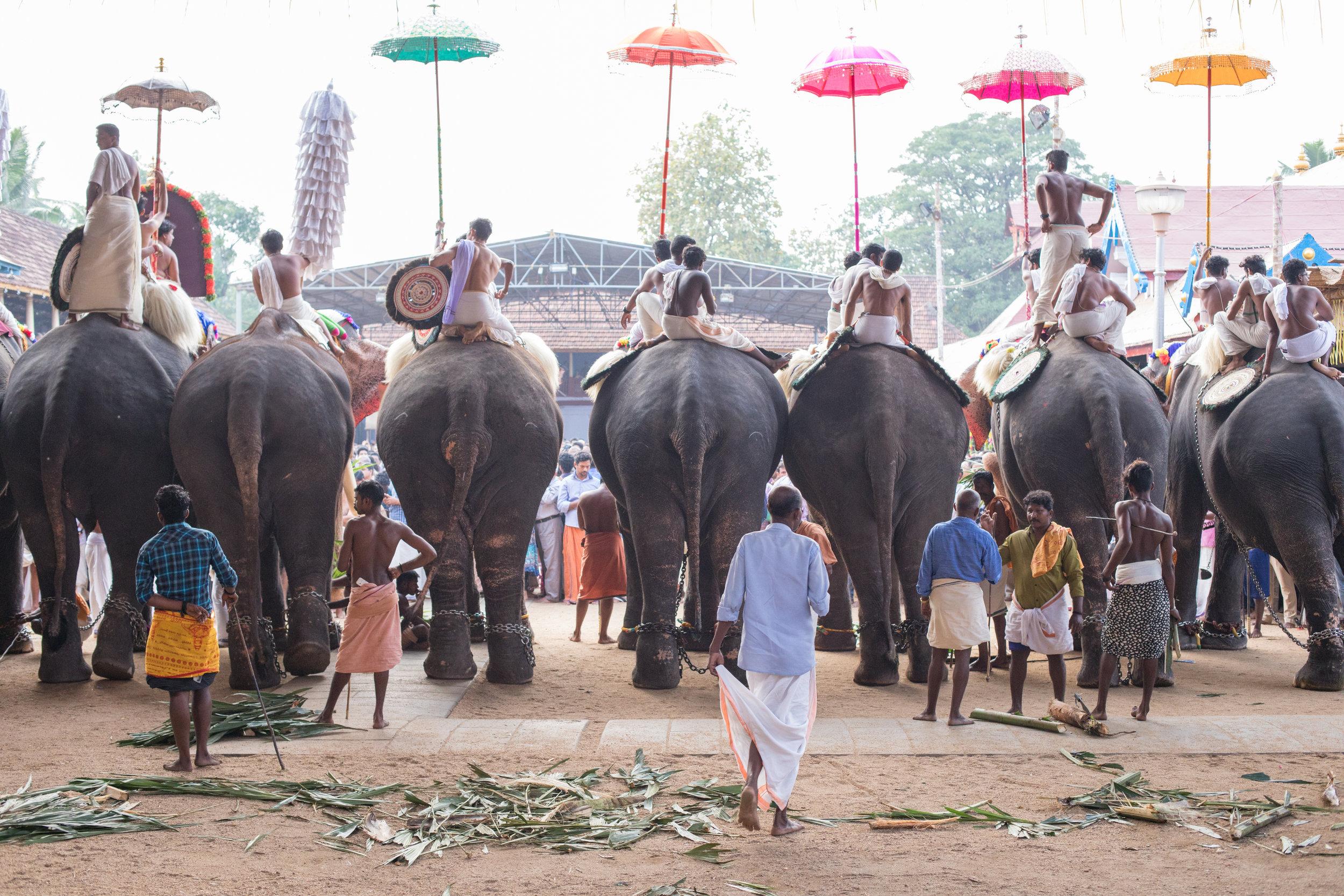 Kerala's Elephant Festivals.
