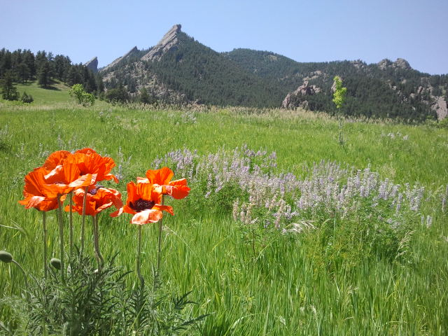 Boulder Colorado Best Seldom-Visited Hiking Trails - Chautauqua Meadow trails - Great hiking trail for kids and family