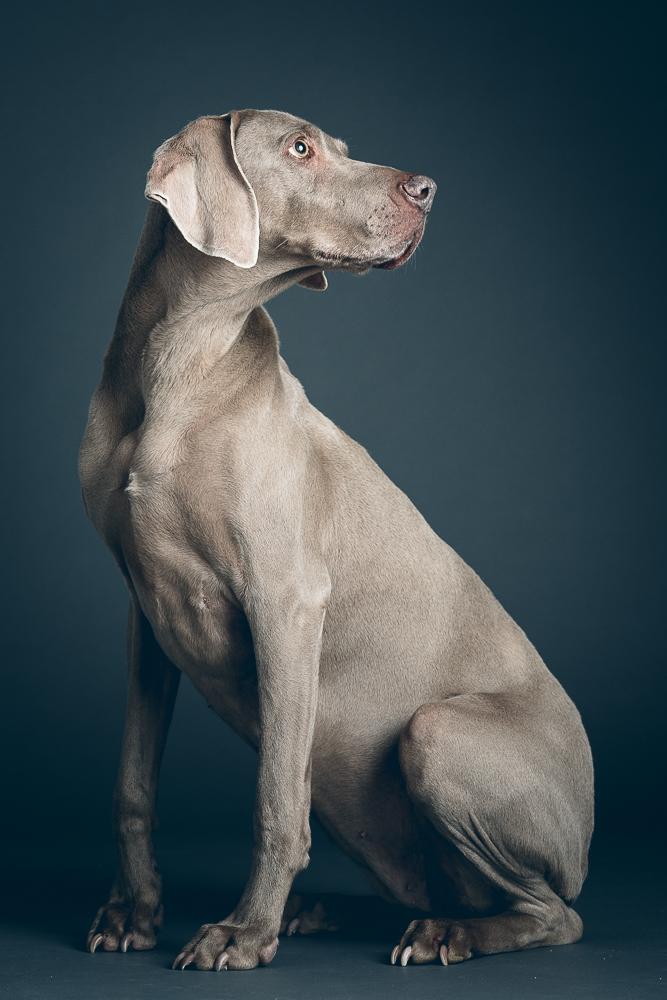 Isle of Wight pet portrait studio photography