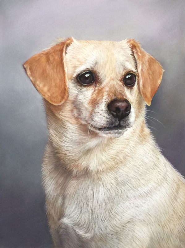Dog 1.jpg