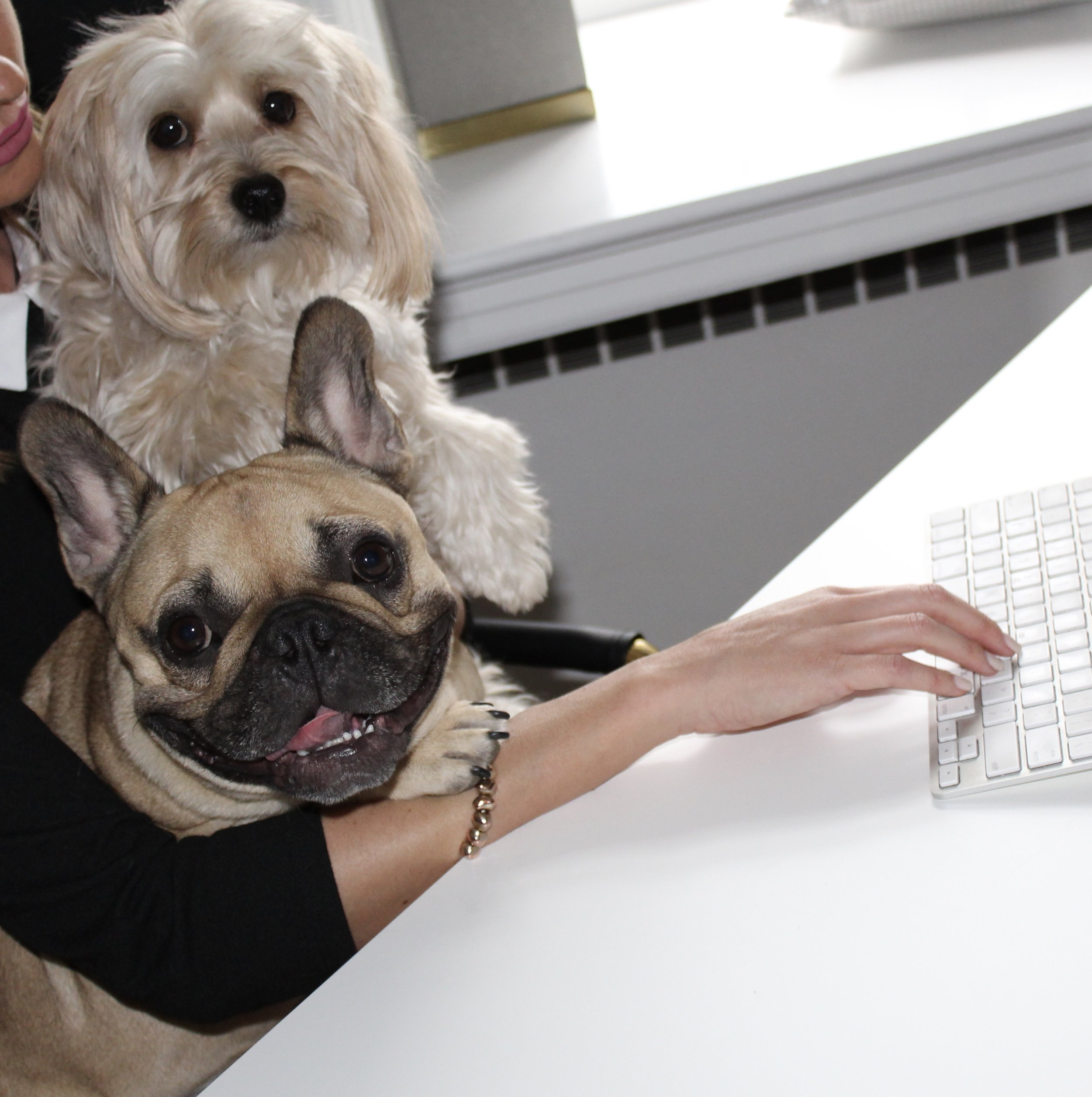 "Tanner and Rory surfing online for the next big pet-star to feature in ""Sophisticated Pets!"""