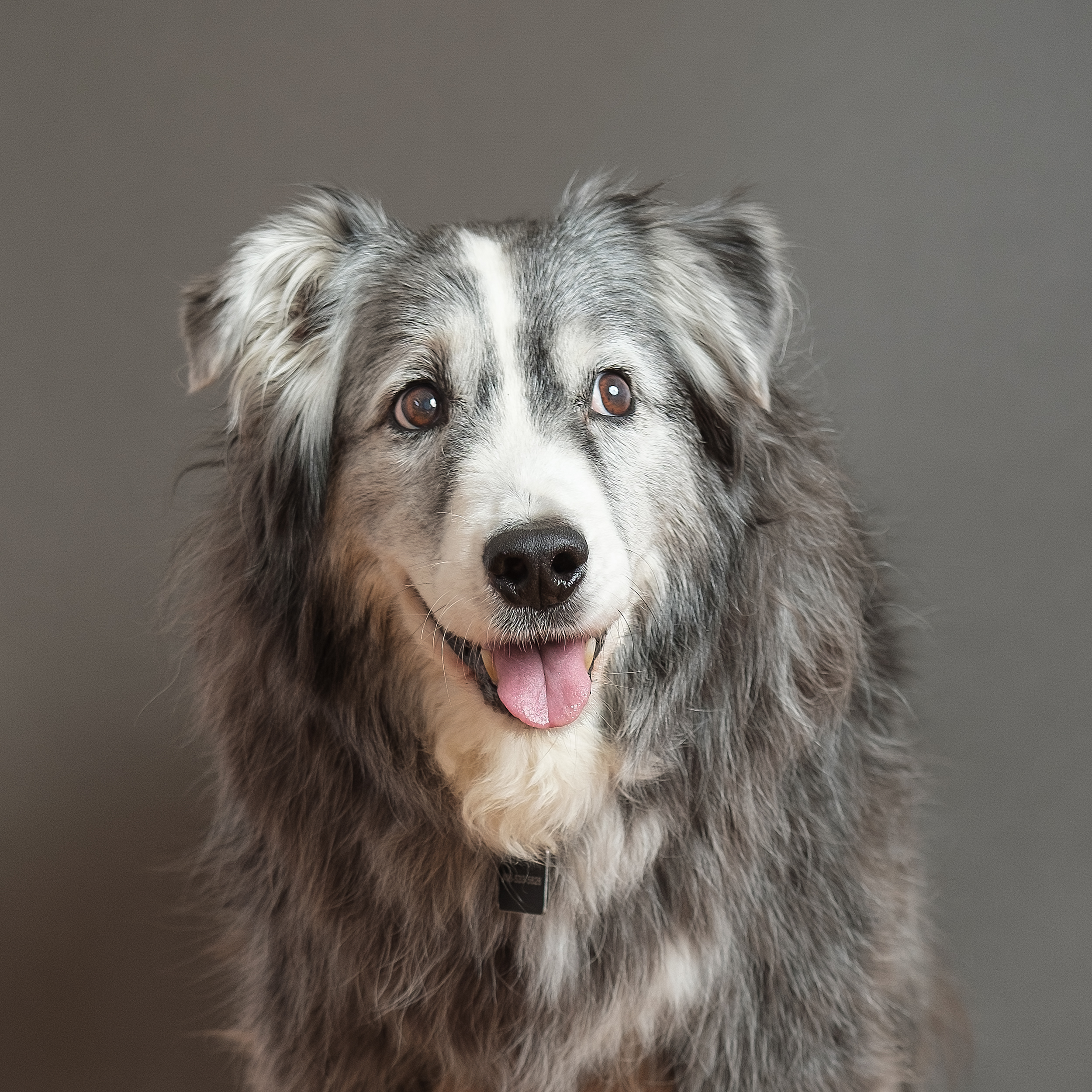 Kyle - Kyle is a 16 years young Australian Shepherd. He was rescued from a cat rescue by his family when his was a puppy. He has his own Instagram account appropriately named...@meowmeowd 🤣🐶