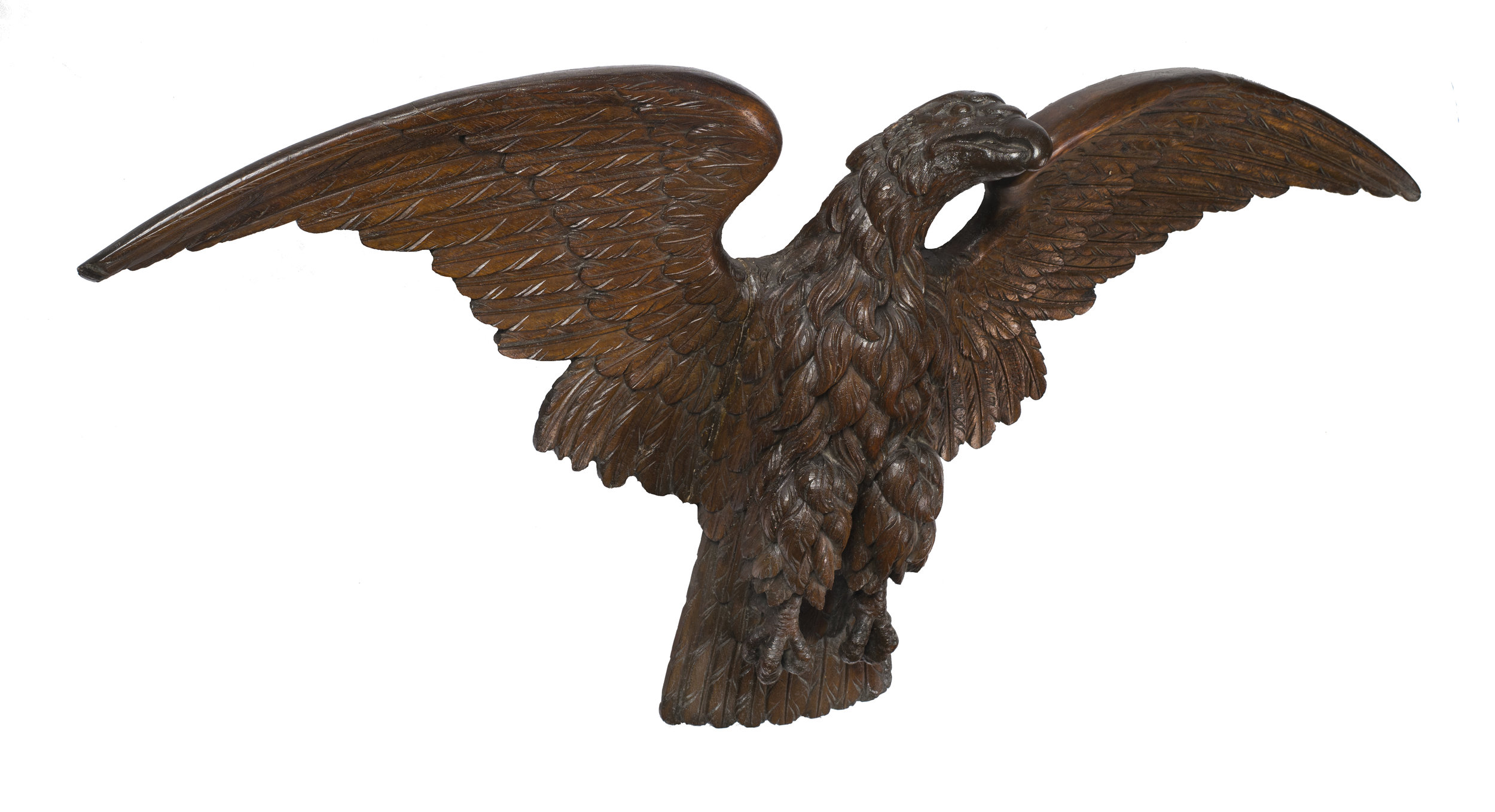 Young Eagle 3.jpg