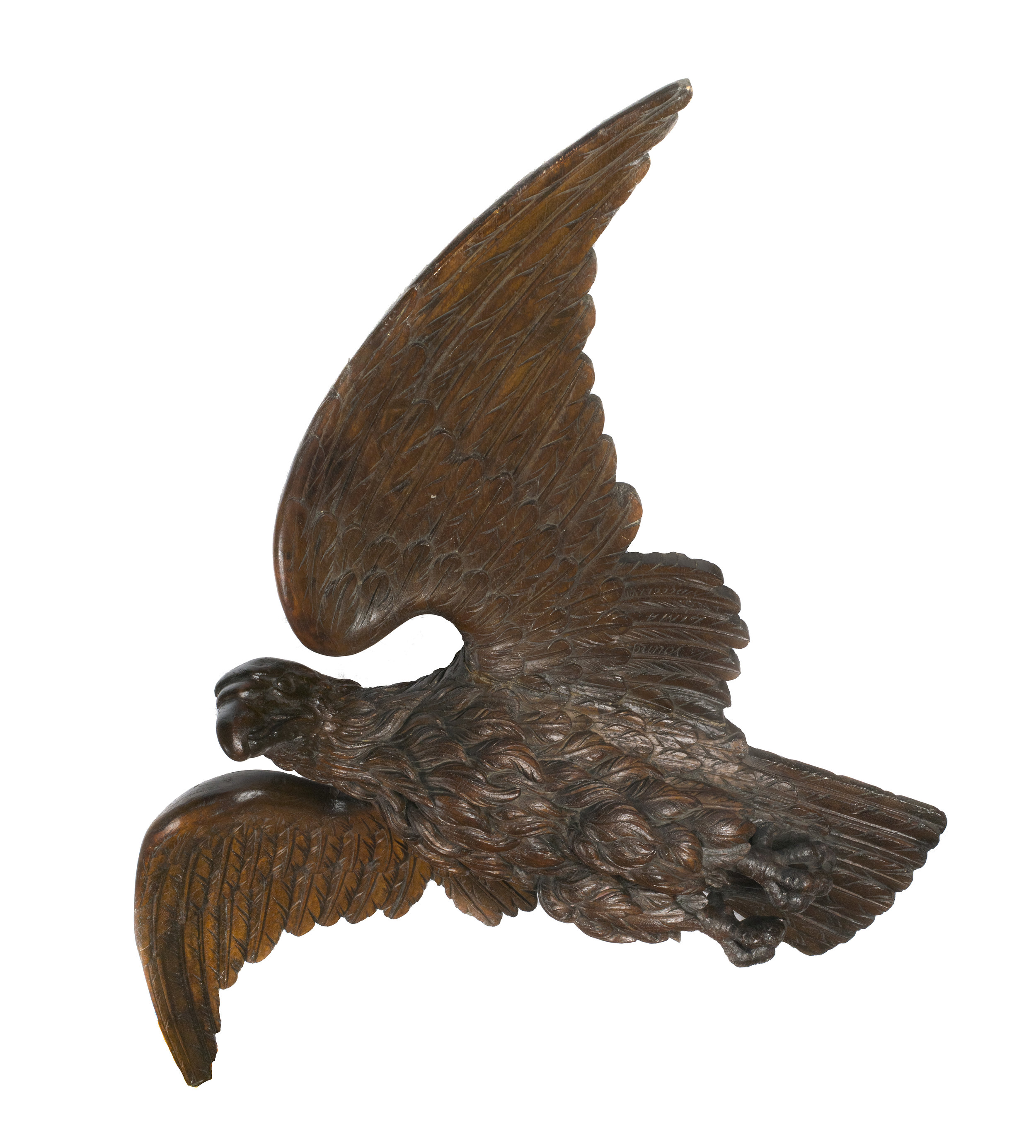 Young Eagle 5.jpg