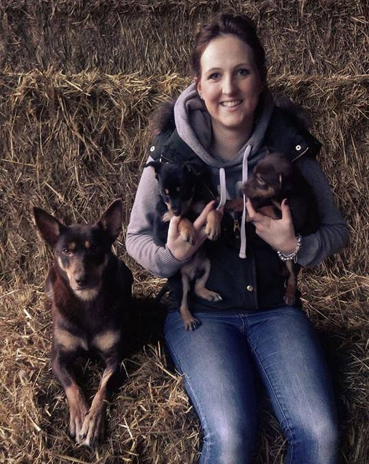 7 Stolen Kelpie pups: All reunited Jan '16