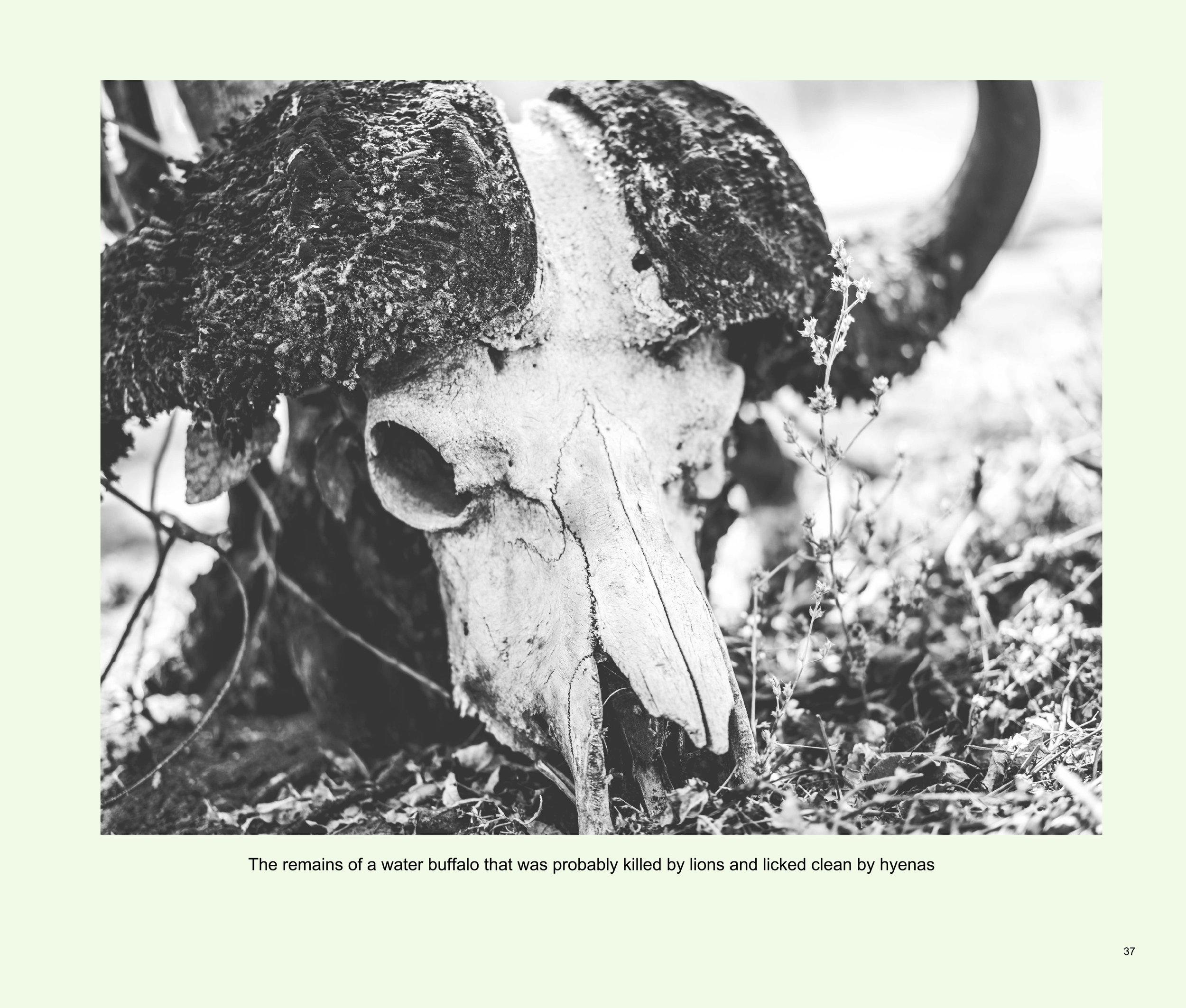 ImagesASouthernAfricaRoadTrip-39.jpg