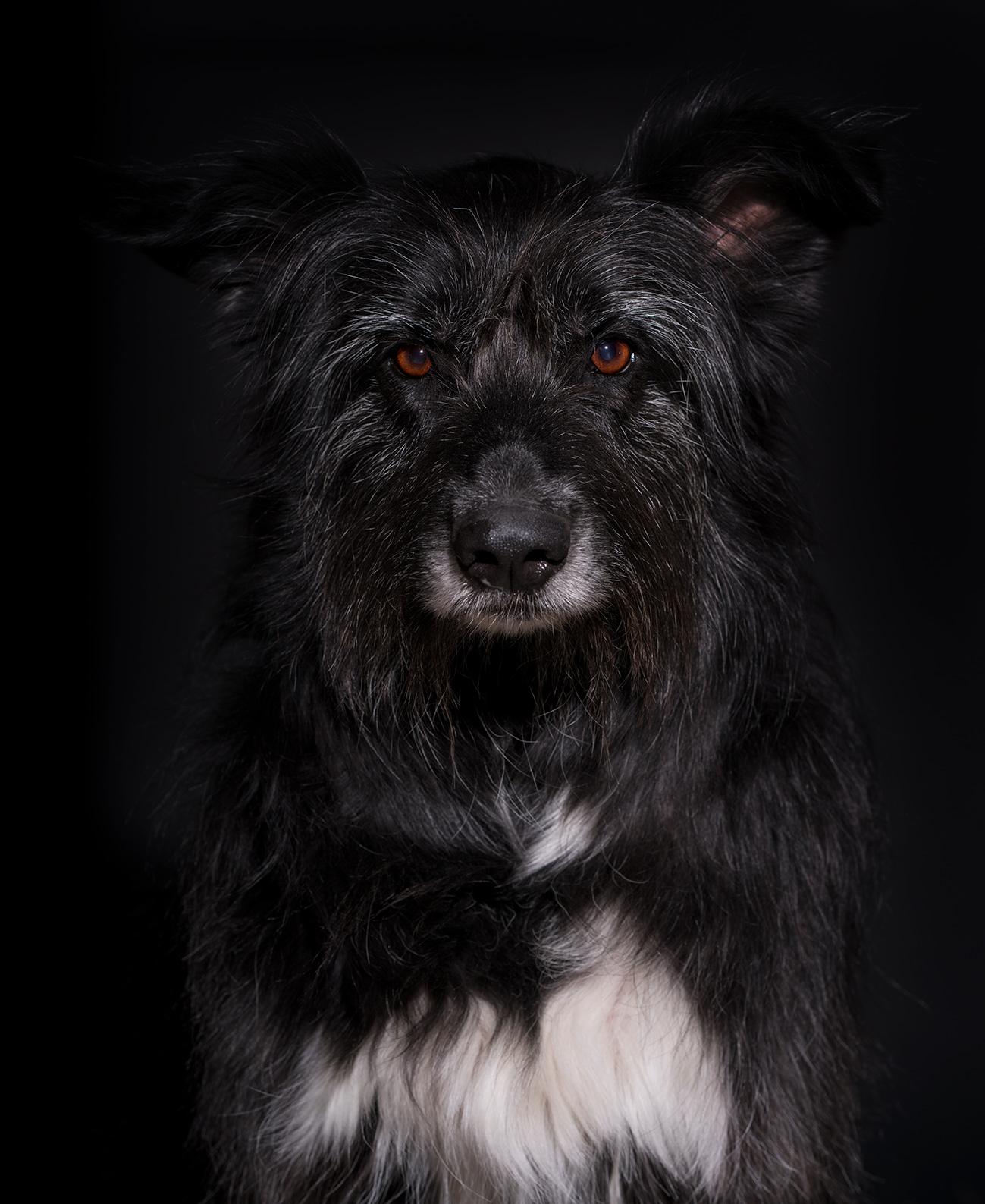 Toni Hund