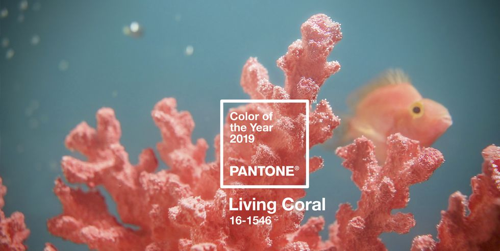 Gray Oak Studio - Wednesday Five - Pantone Color of the Year 2019