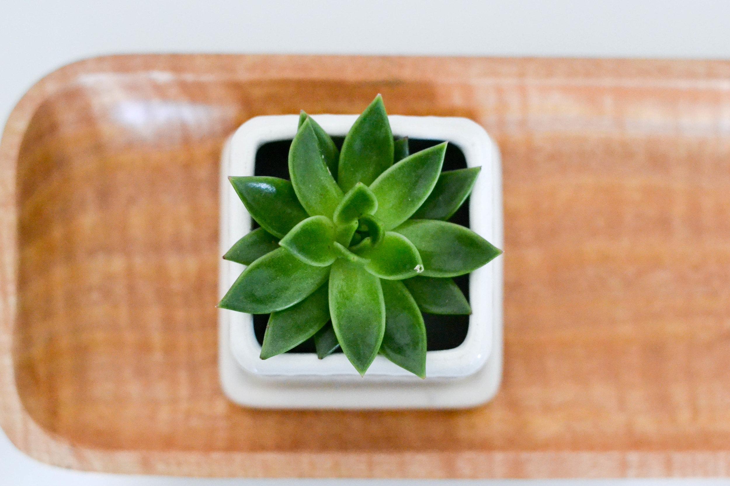 Gray Oak Studio - Lowell Project Living Room - Cactus