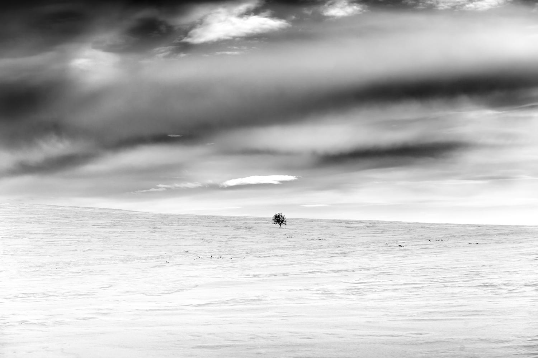kevo_lapland_winter_bw4.jpg