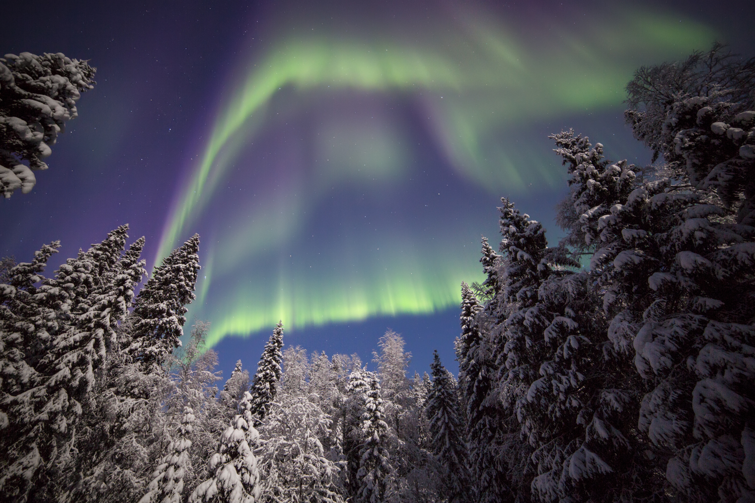 Auroras dancing above the trees in the Korouoma canyon.