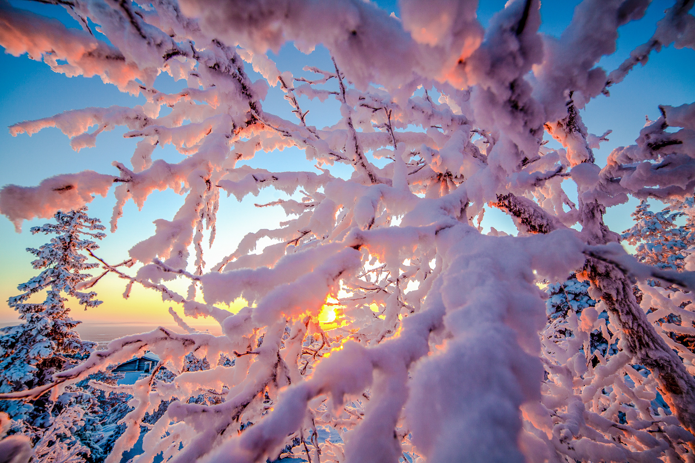 winter_day_lapland-4.jpg