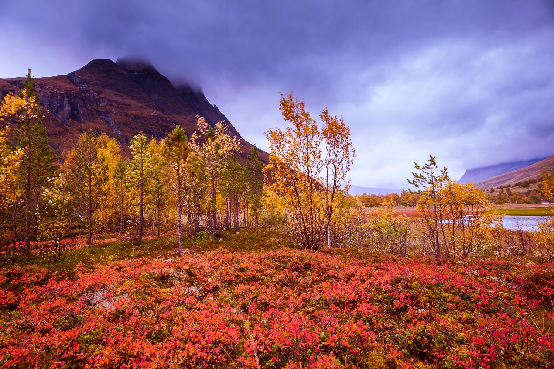 autumn_colours_arctic.jpg