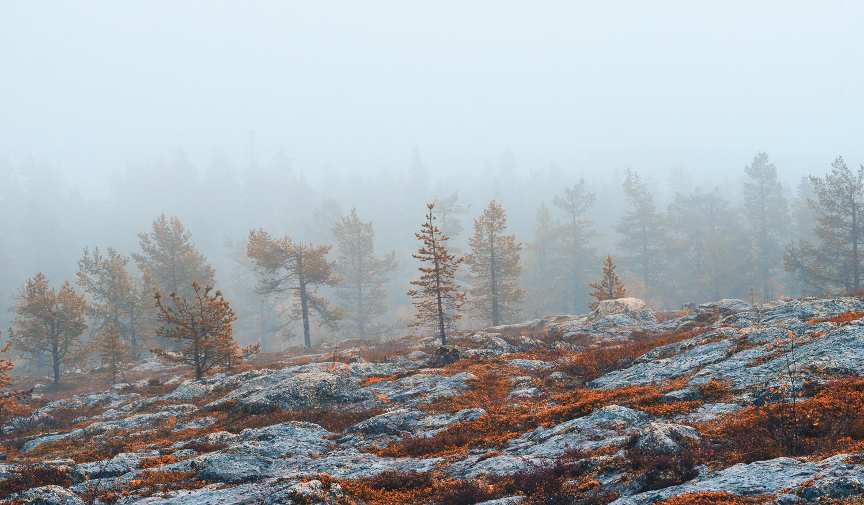 autumn_trees_forest_tour.jpg