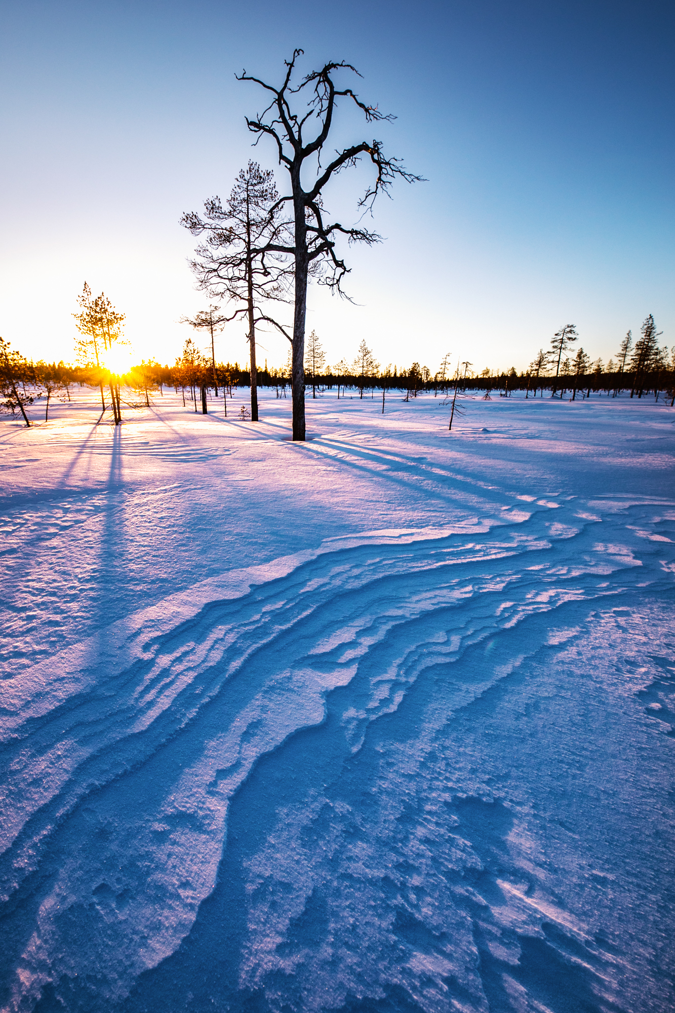 forest_lapland_winter_workshop.jpg