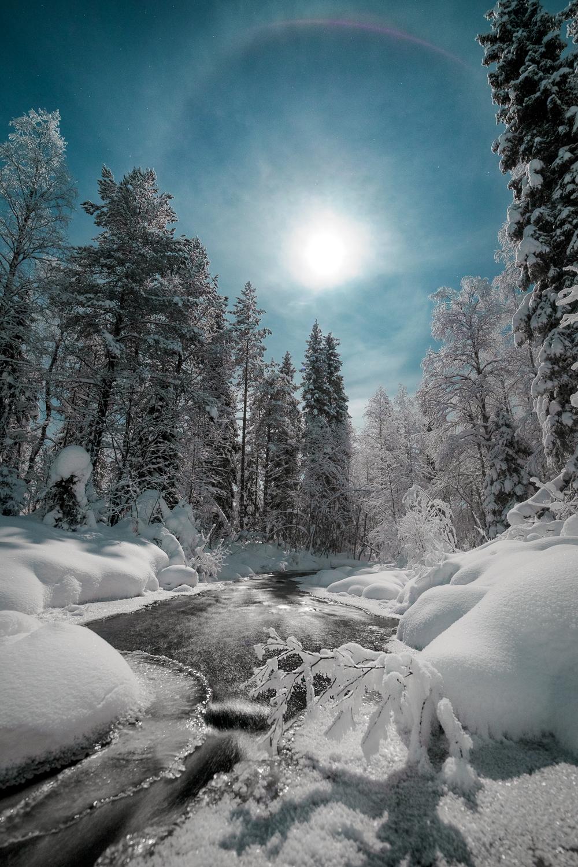 aurora_borealis_forest.jpg