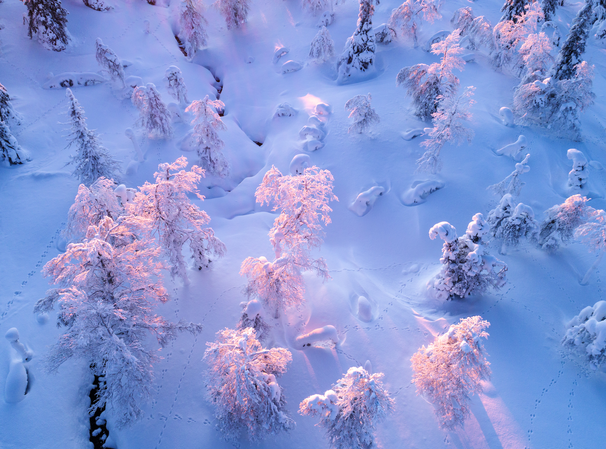 forest_lapland_photography.jpg