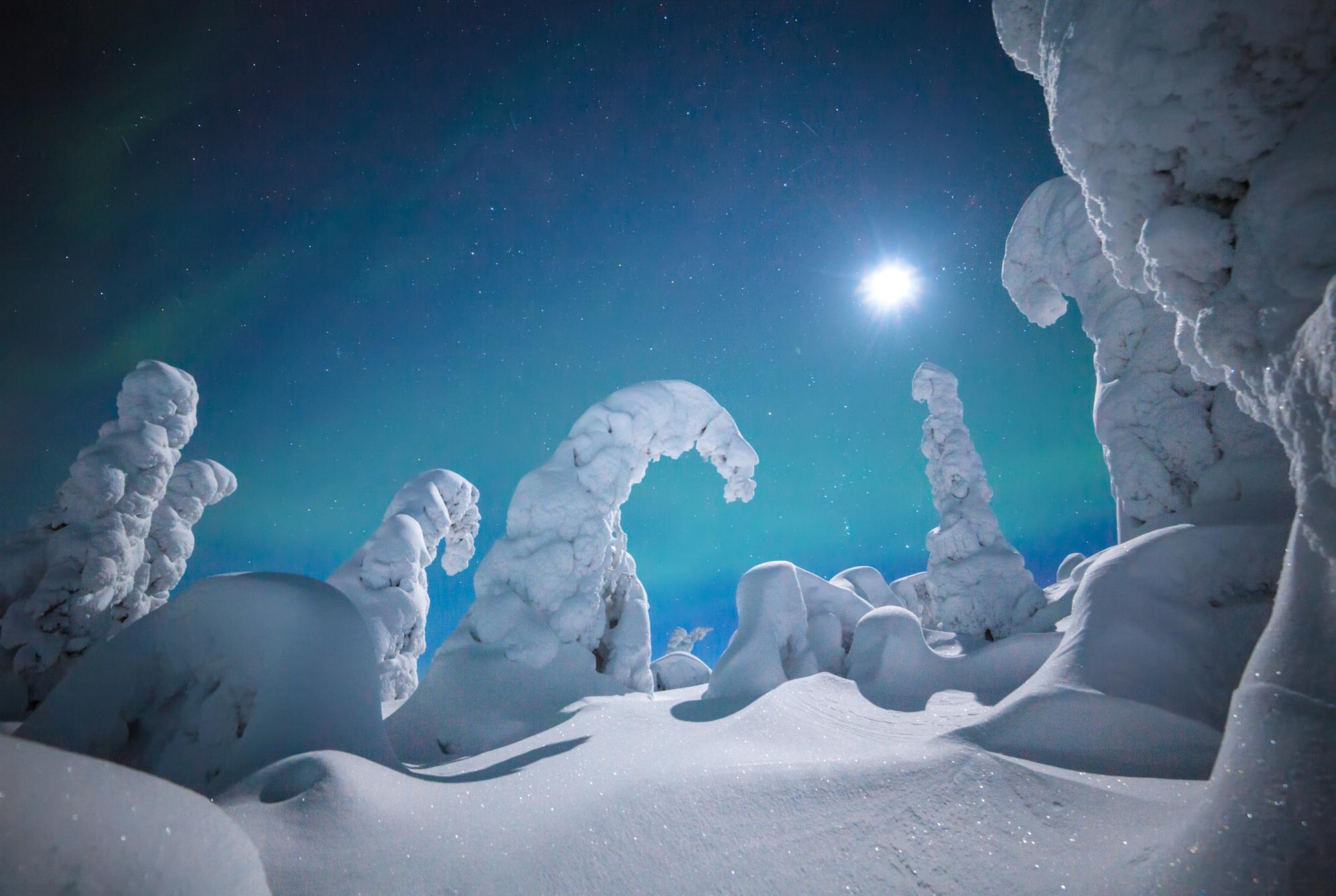 northern_lights_aurora_forest_winter.jpg