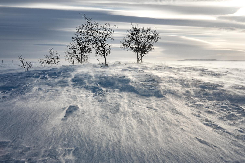 wilderness_arctic.jpg