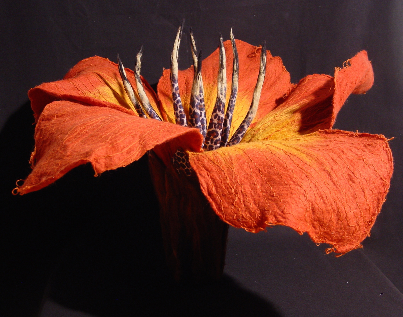 Hibiscus leopardium.jpg