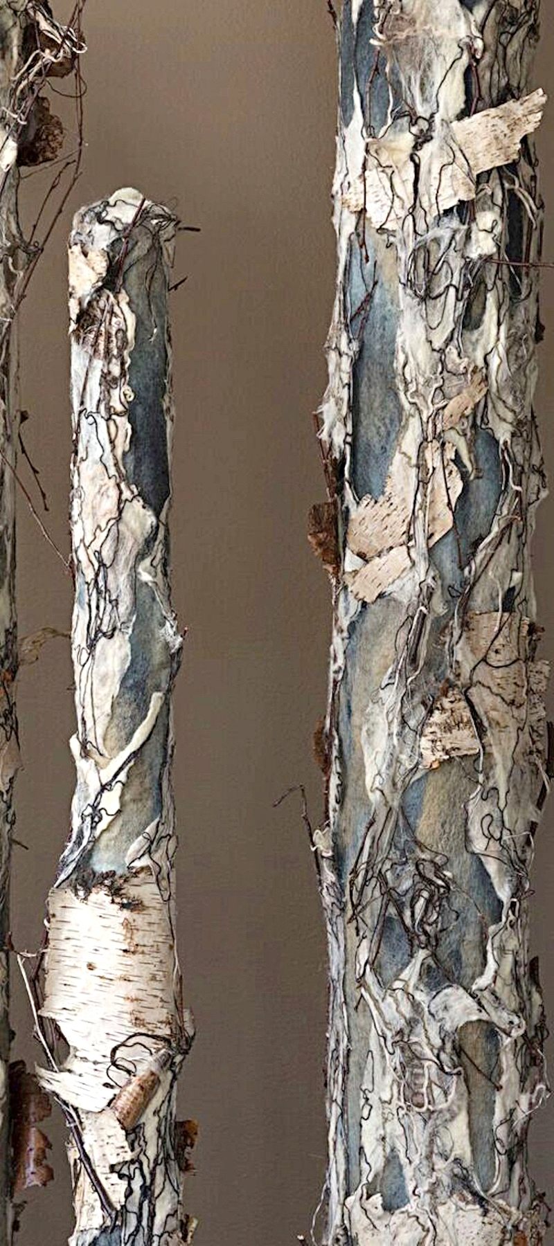 birch trees gallery