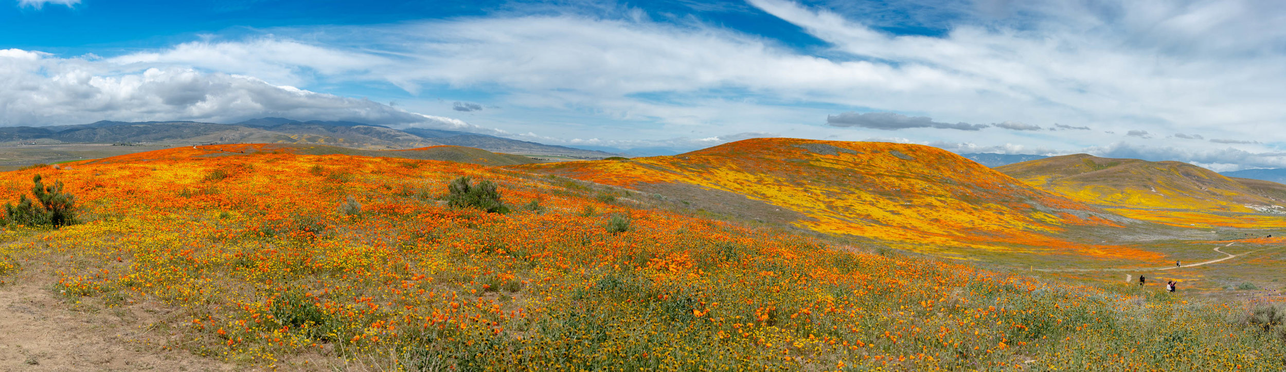 California Poppy Preserve Lancaster, California