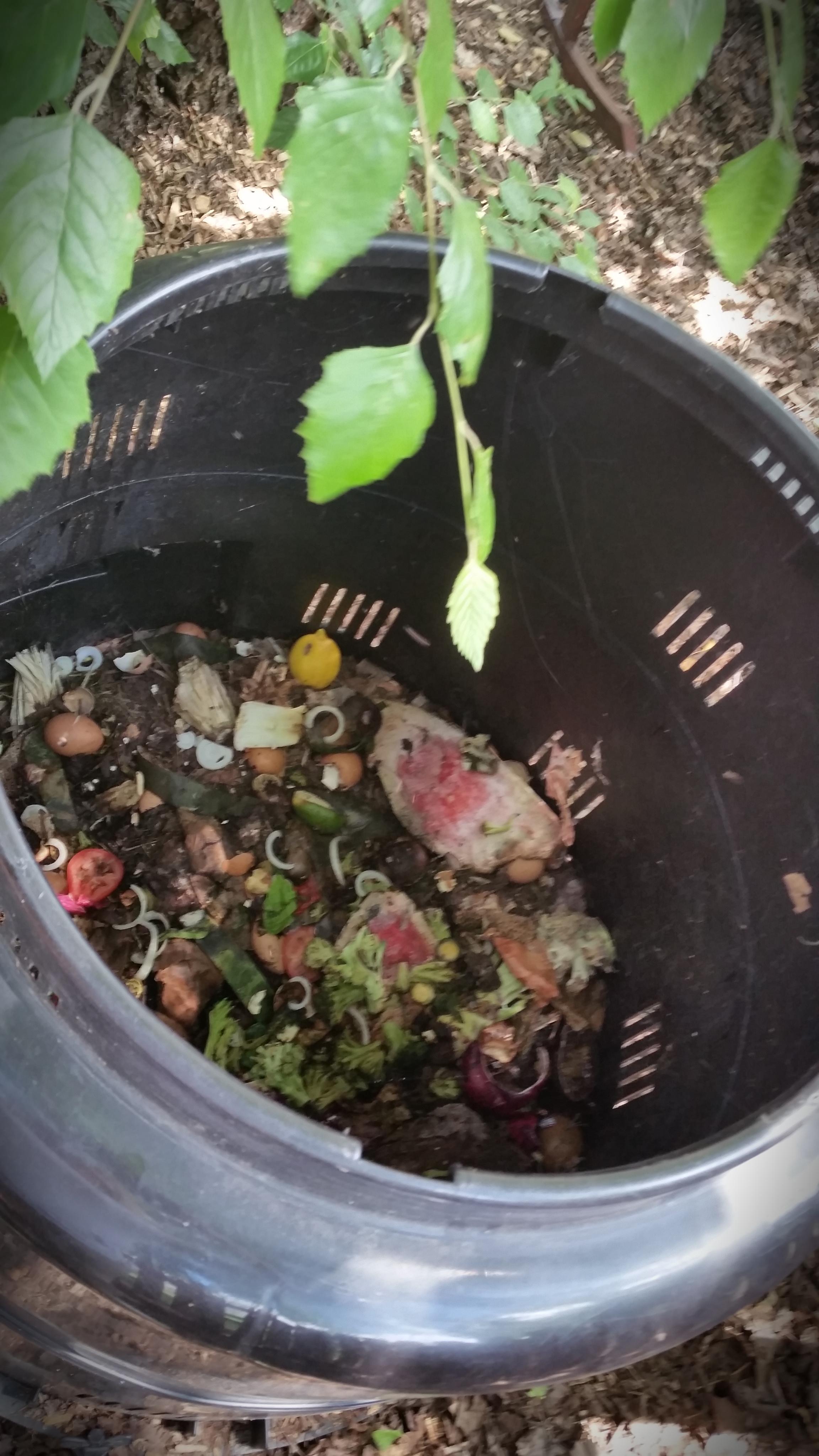 Compost Bin Pic.jpg