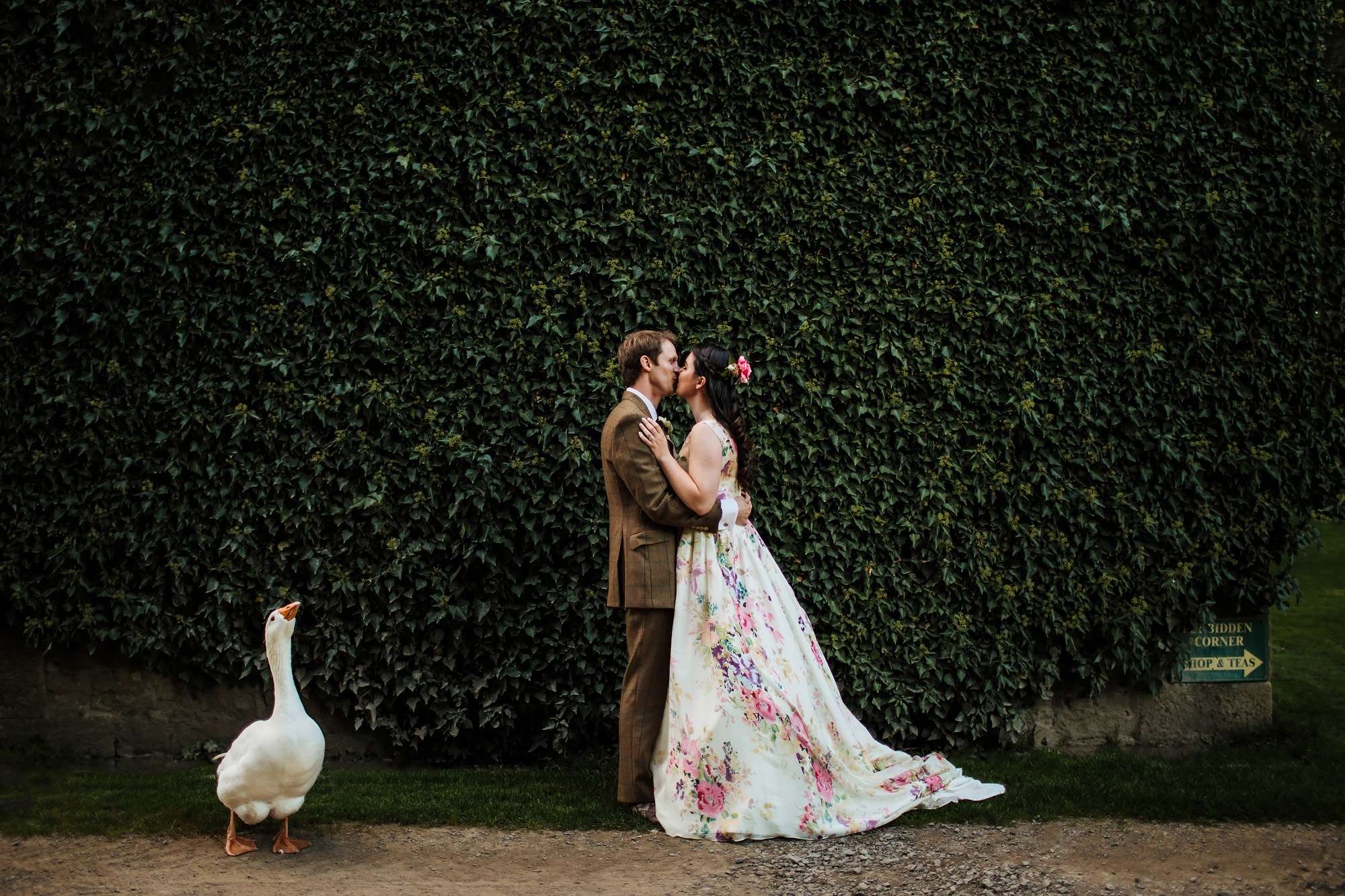 Bride and groom kissing as a goose watches