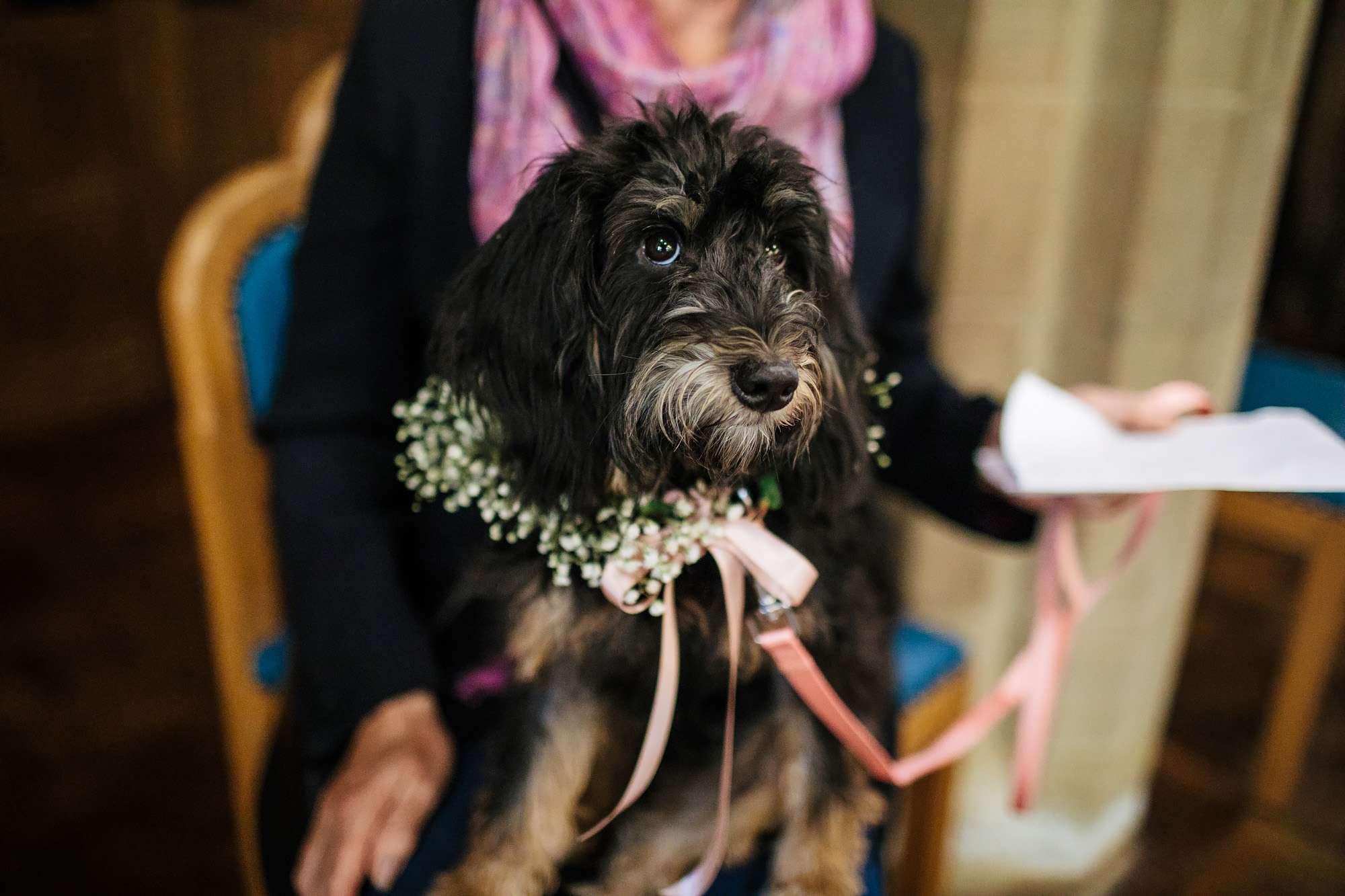 Dog at a wedding in Blackpool