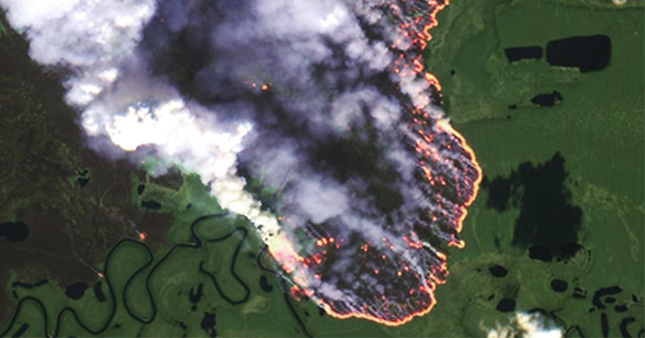 Dubbed the 'World's Lungs', the Amazon is responsible for an estimated 20% of global oxygen production