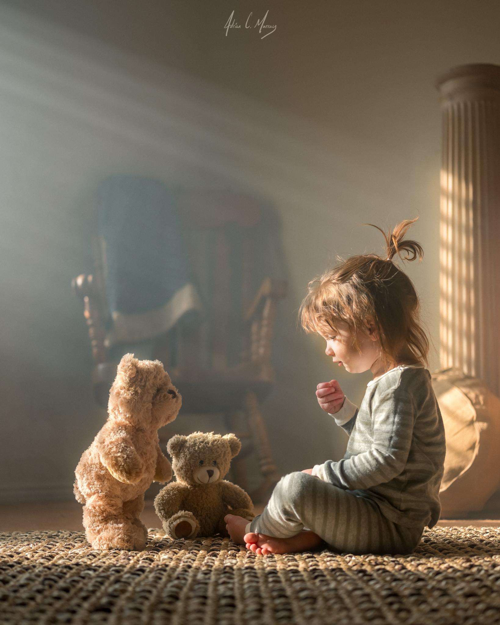 Adrian C Murray teddy bears