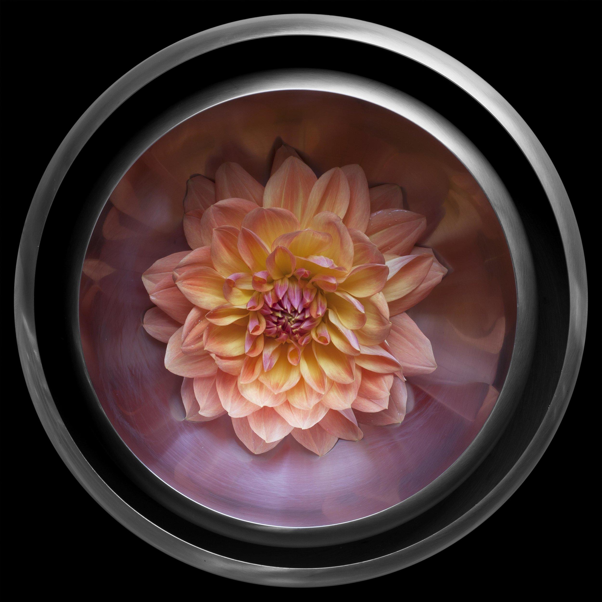 Peach Dahlia.jpg